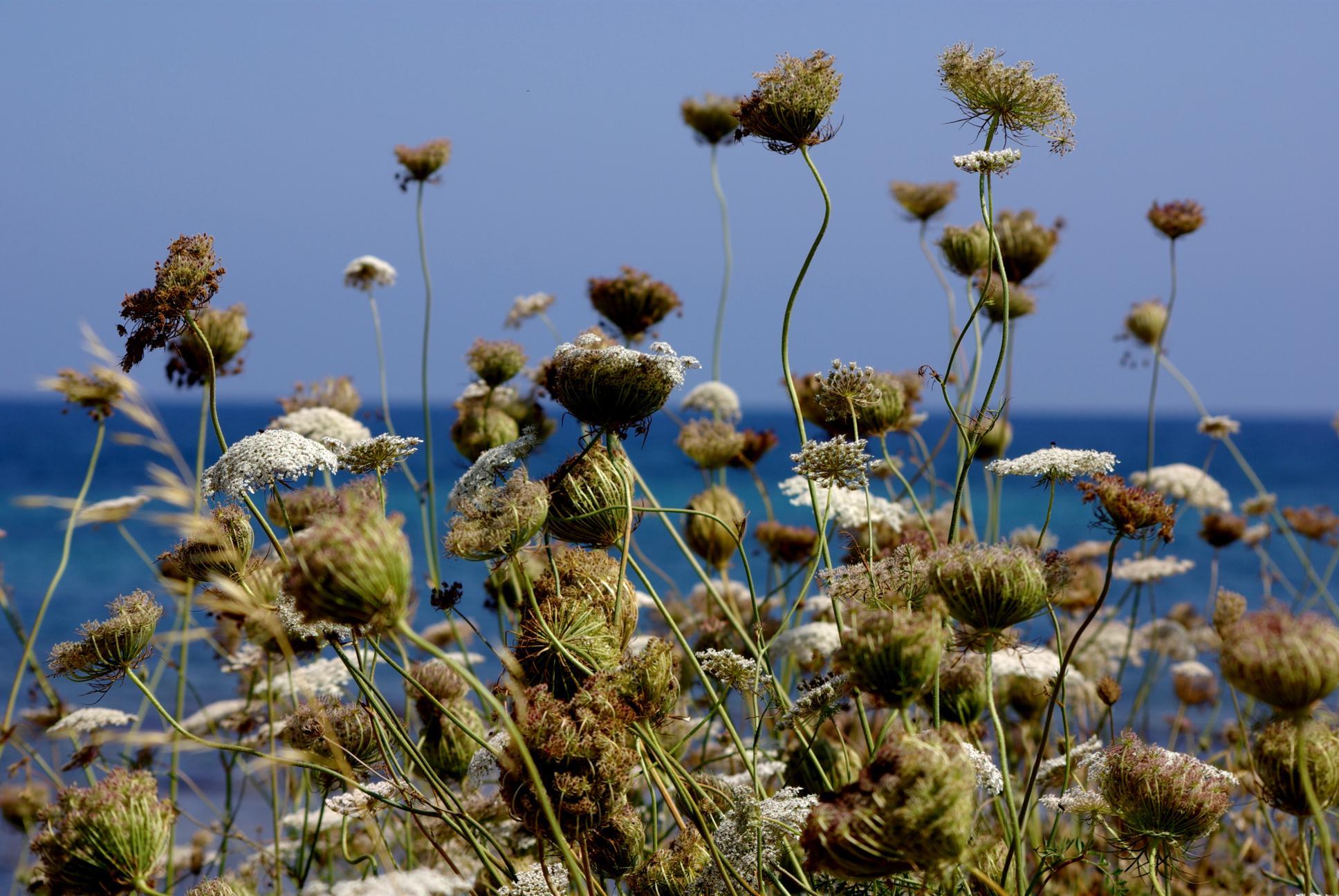 Playa Caló En Timo