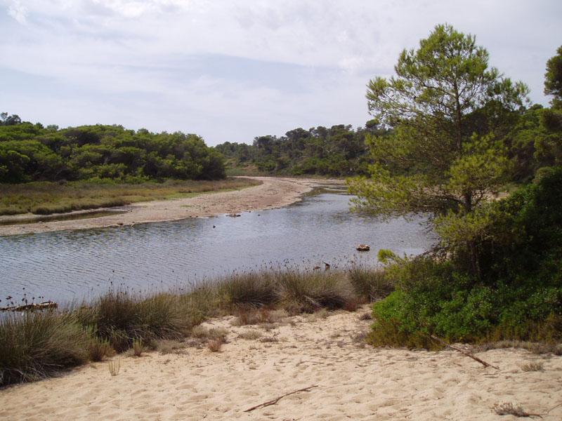 Foto playa Sa Cánova. Mal1