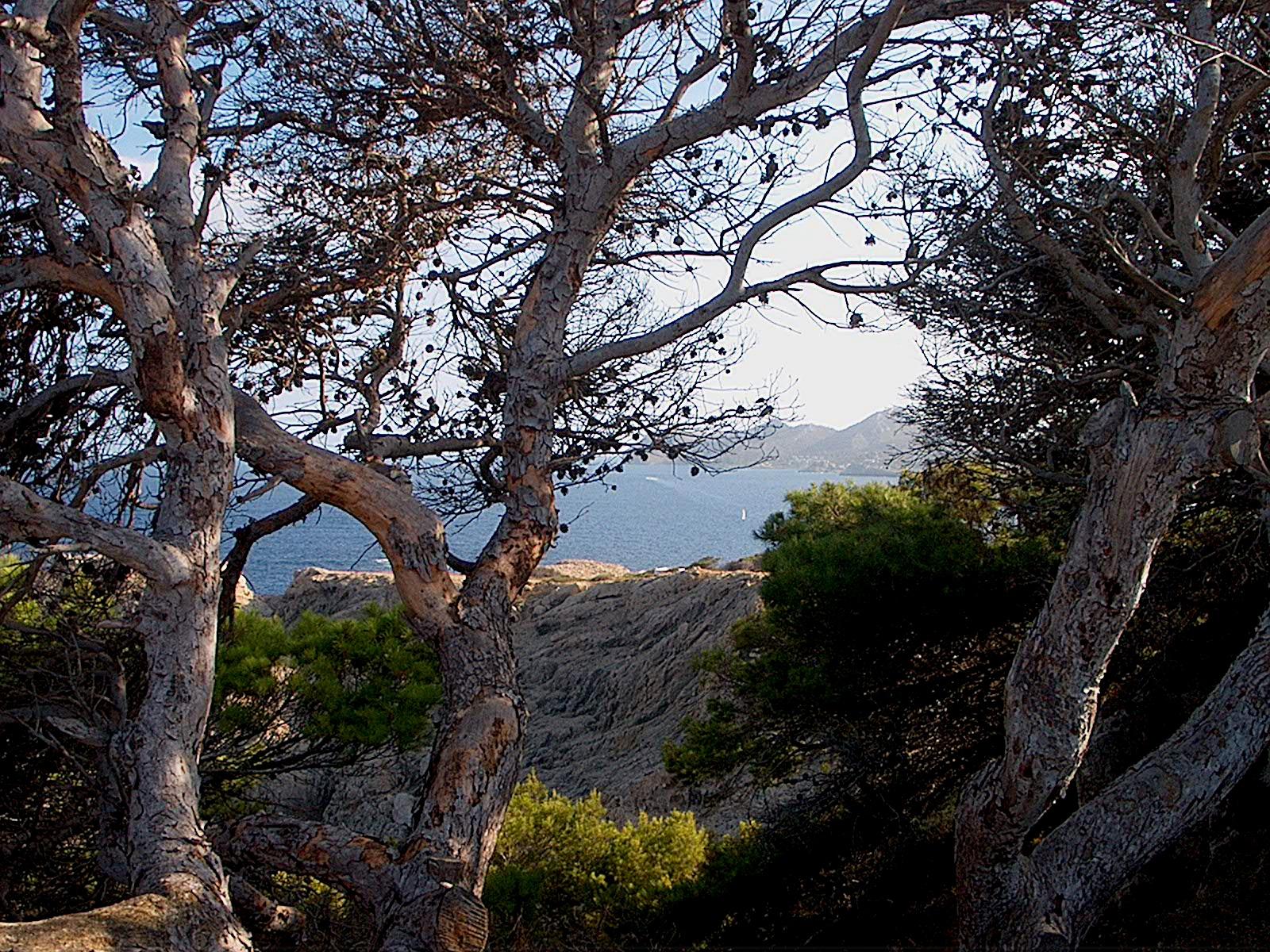 Foto playa Cala Rotja. Paisaje mallorquí 2