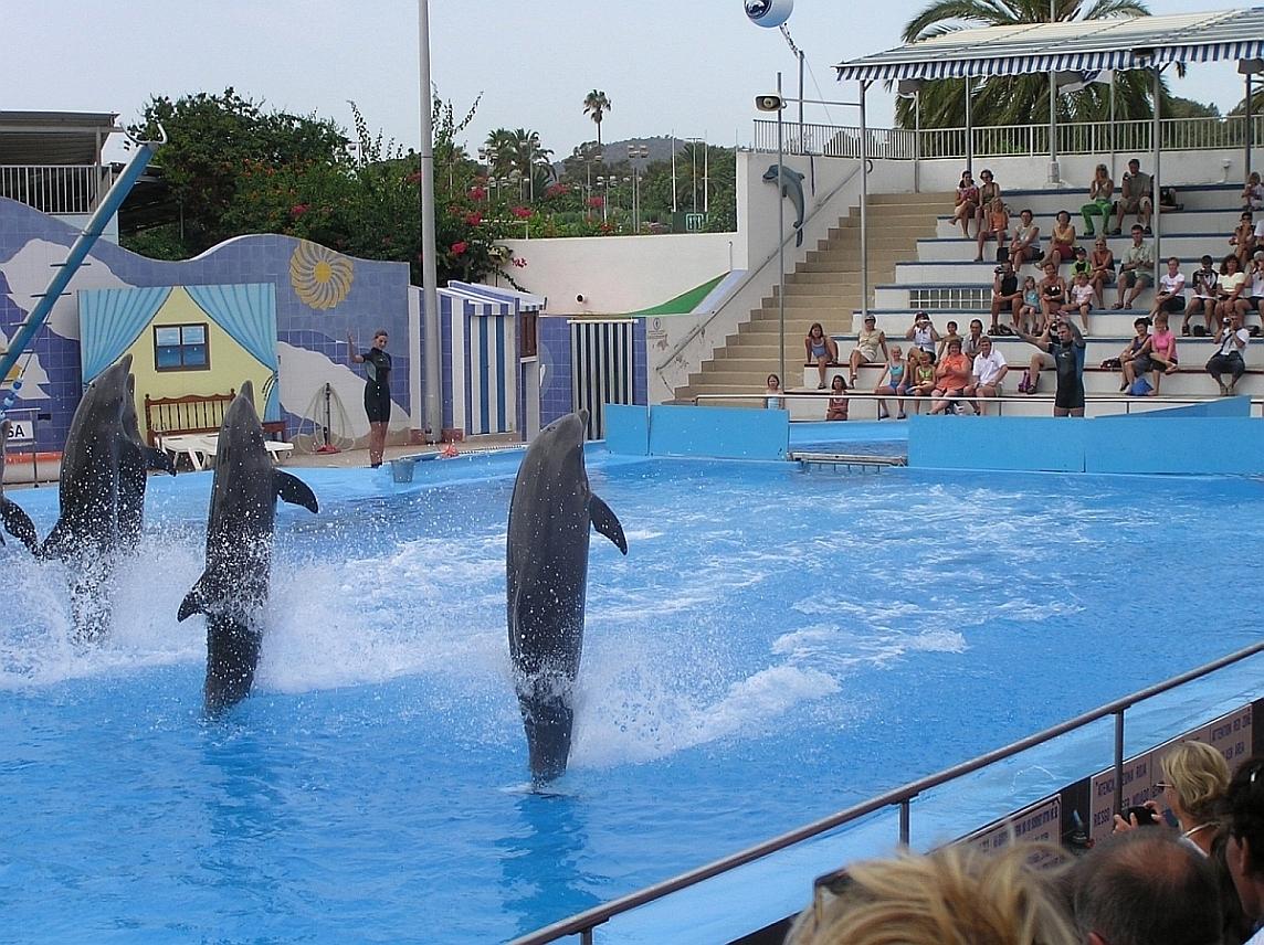 Foto playa Oratori de Portals. Majorca: Marineland - Dolphin show - 2003