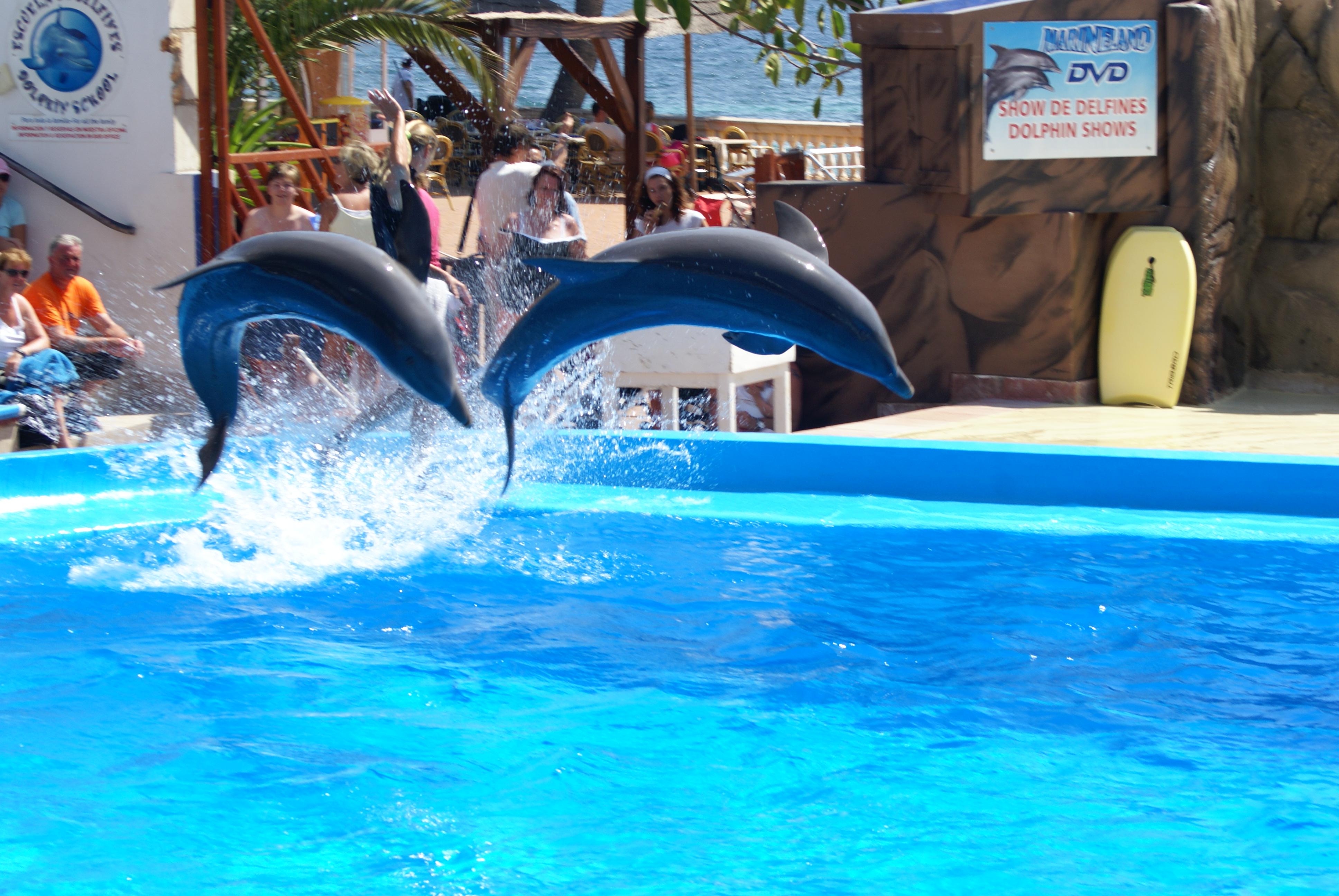 Foto playa Oratori de Portals. Mallorca - Calvia, Marineland