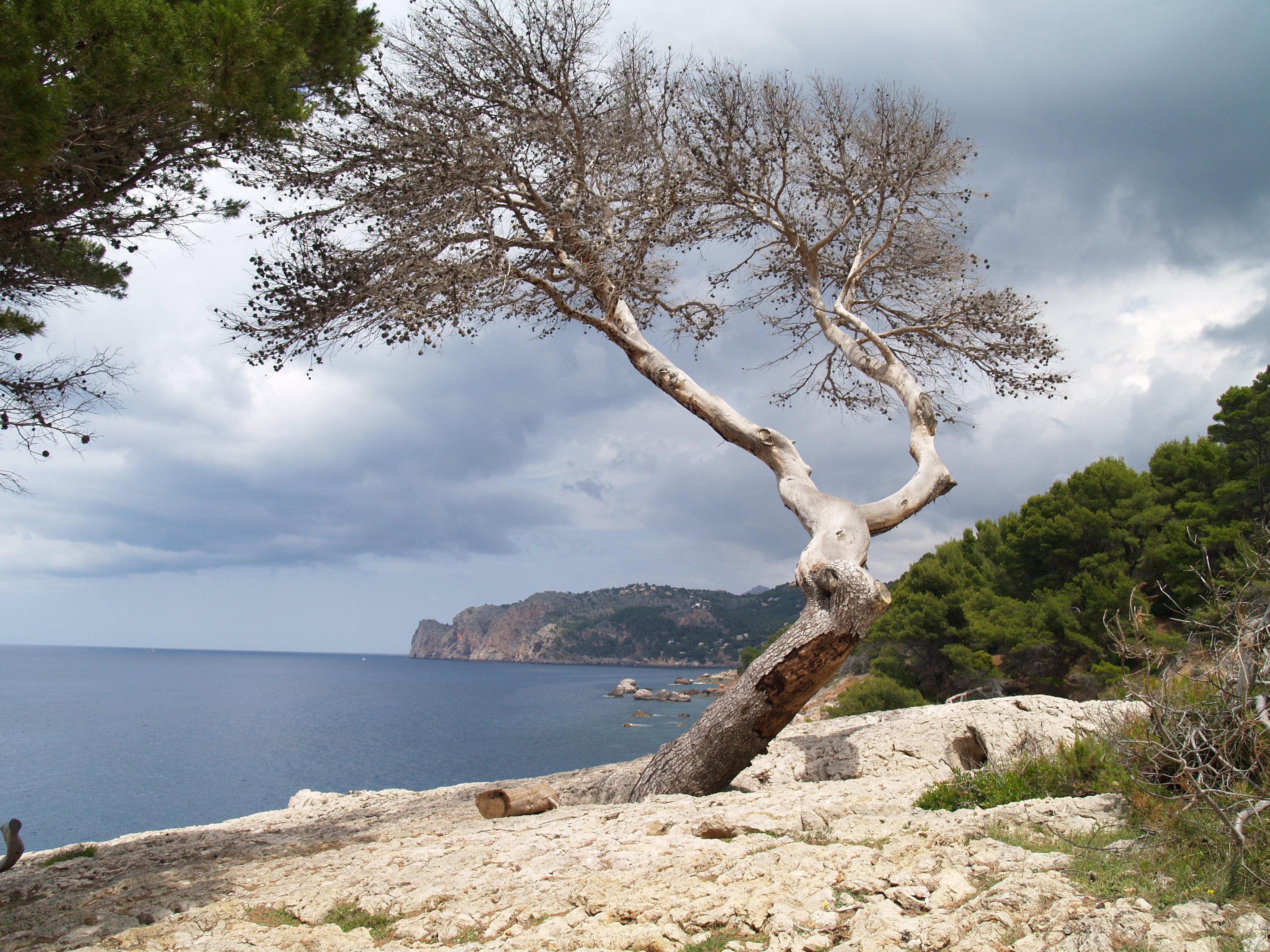 Foto playa Llucalcari. Cala Deià