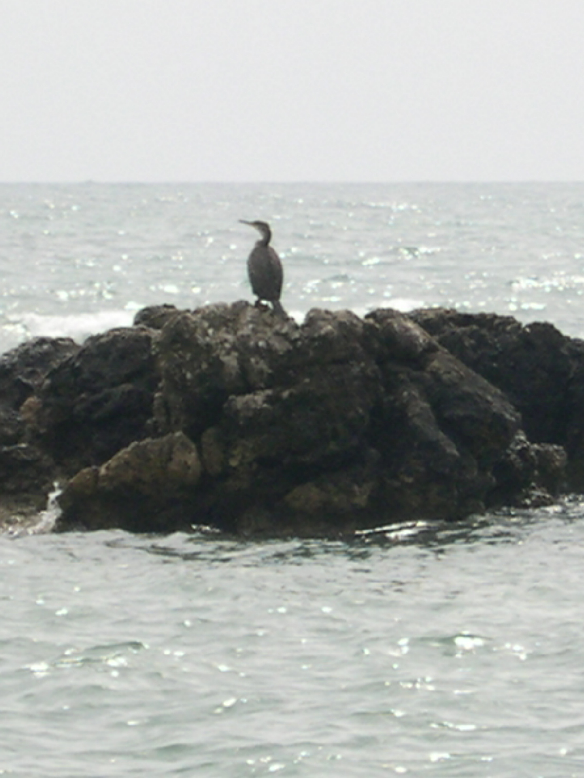 Foto playa Port Vell. corbmarí - sa marjal