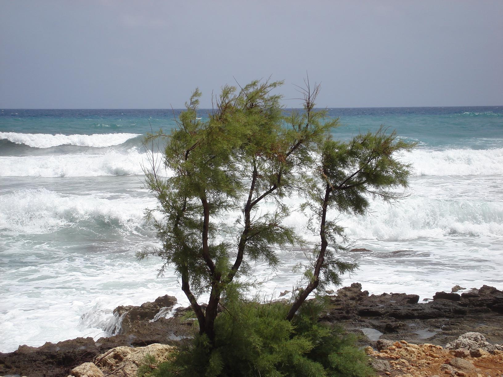 Foto playa Cala Moreia / S´Illot. Sa Coma 2 VB
