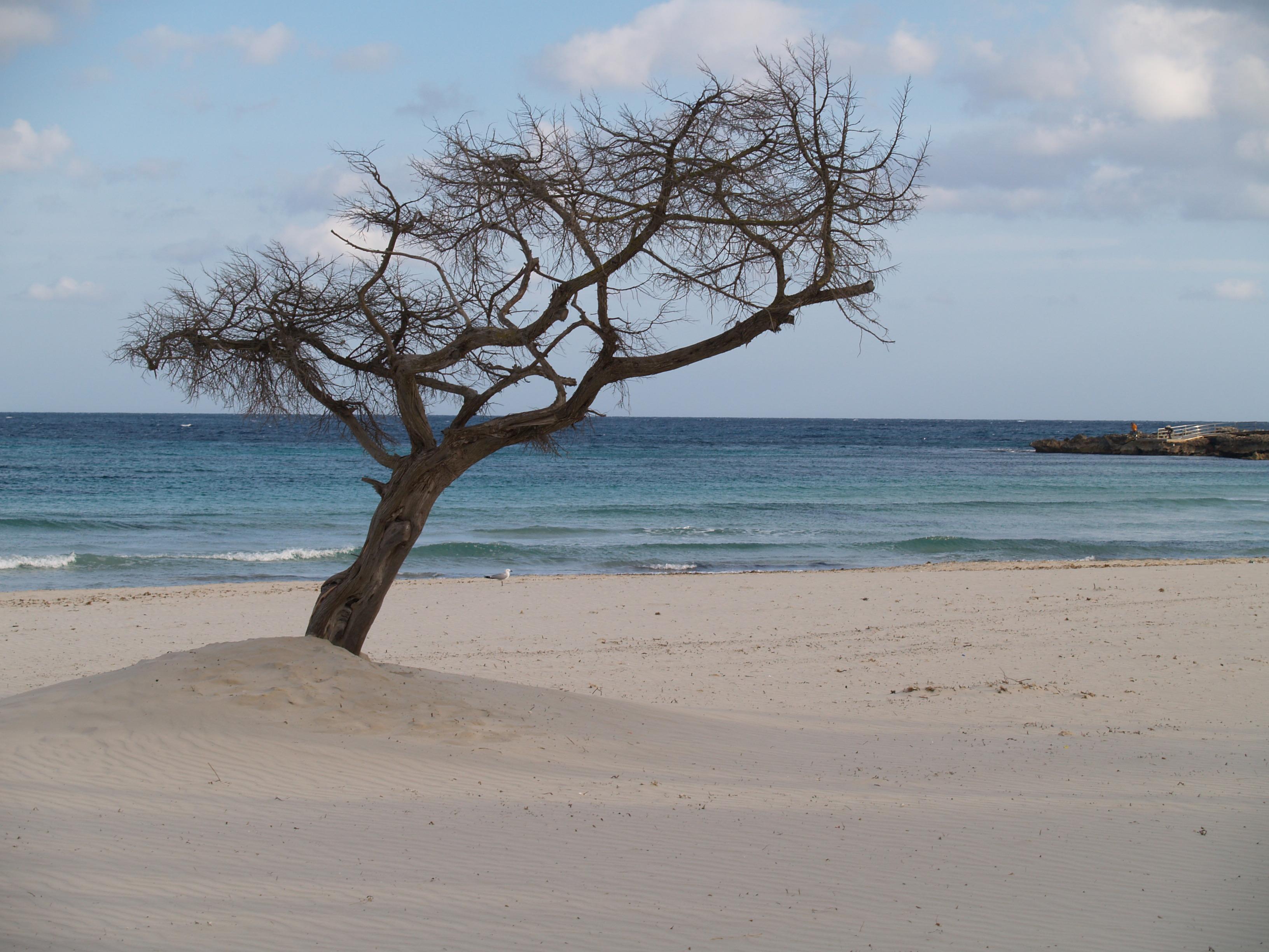 Foto playa Cala Moreia / S´Illot. Playa de Sa Coma