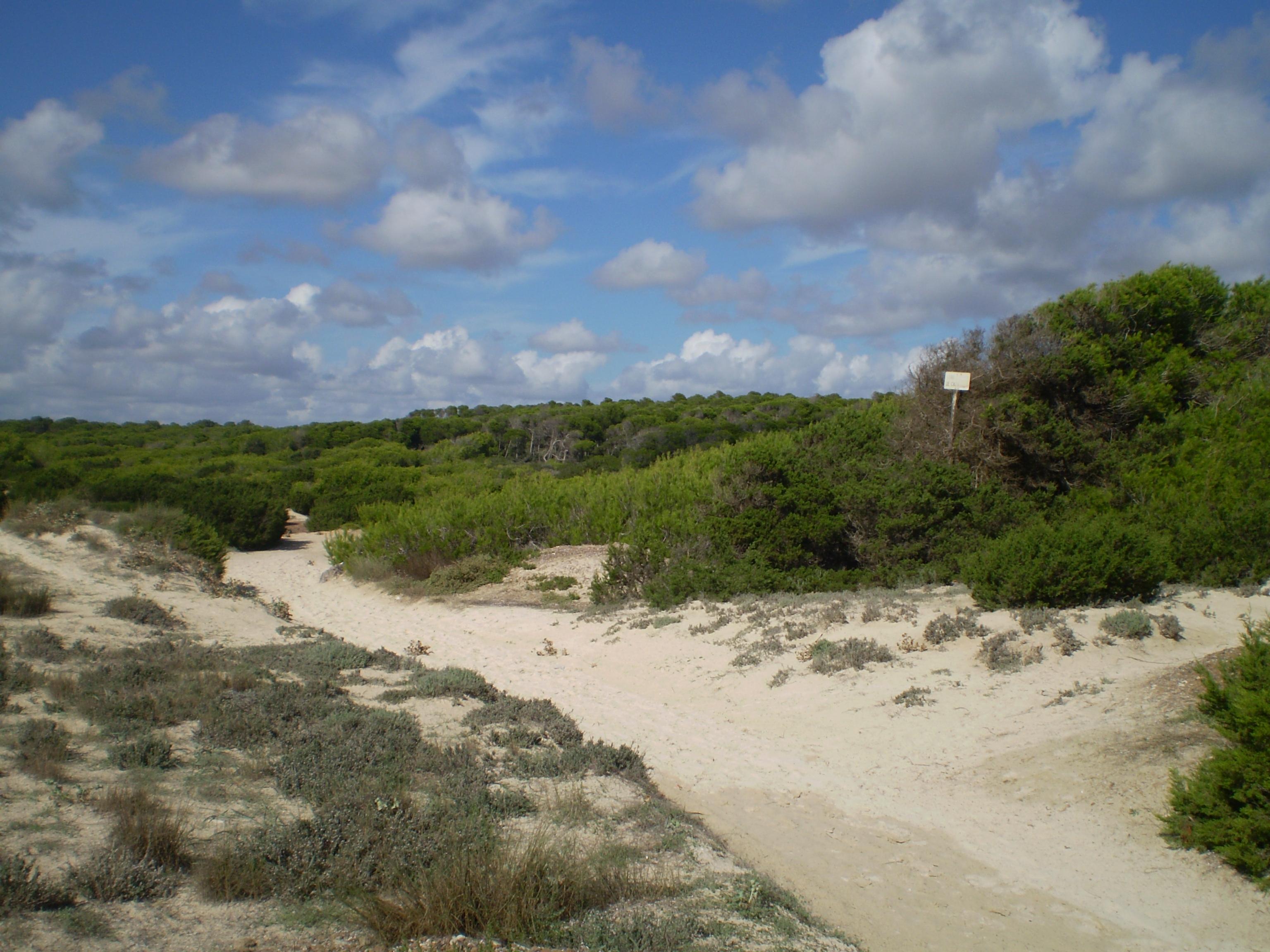Foto playa Cala Pi. Der Sand vom Strand
