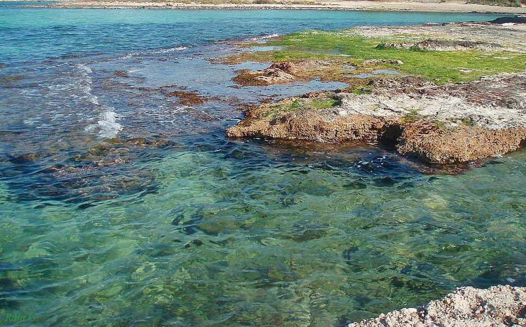 Foto playa San Antonio / Es Regueró. Baja mar
