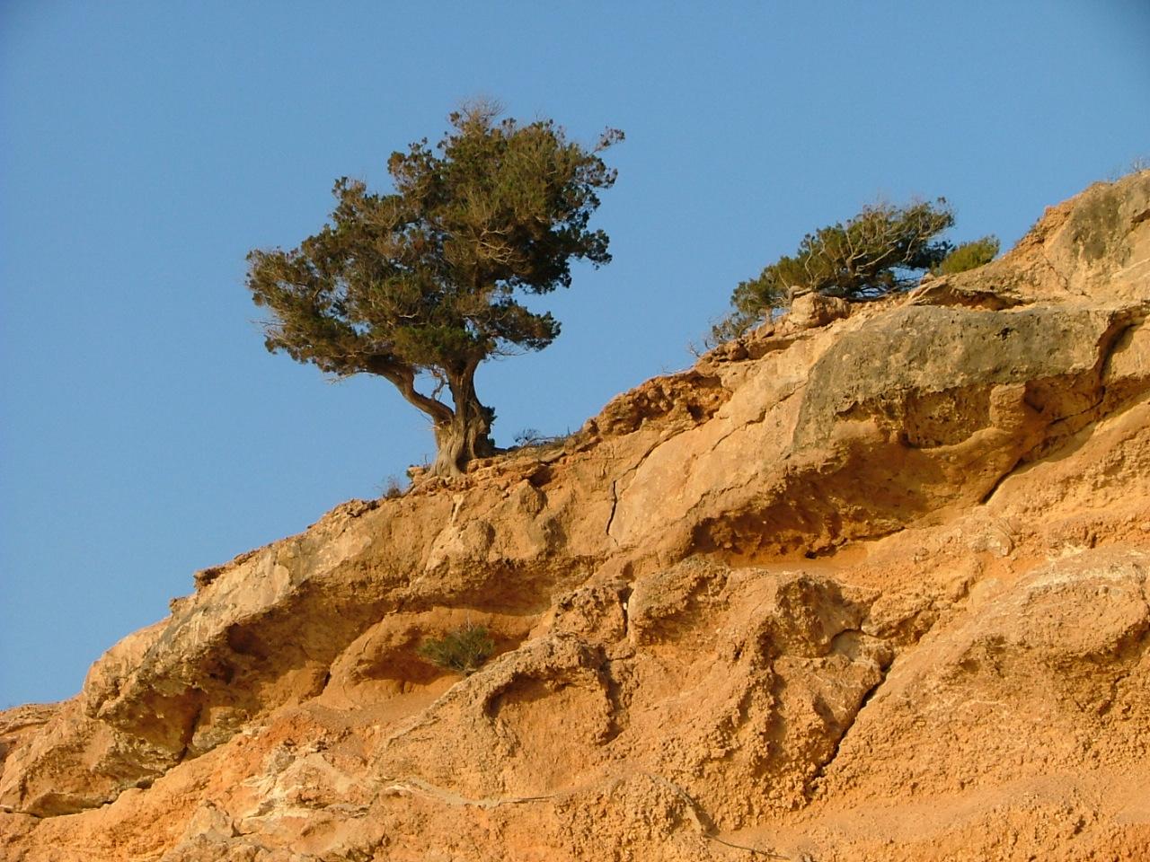 Foto playa Cala Xarraca. Vida en las piedras