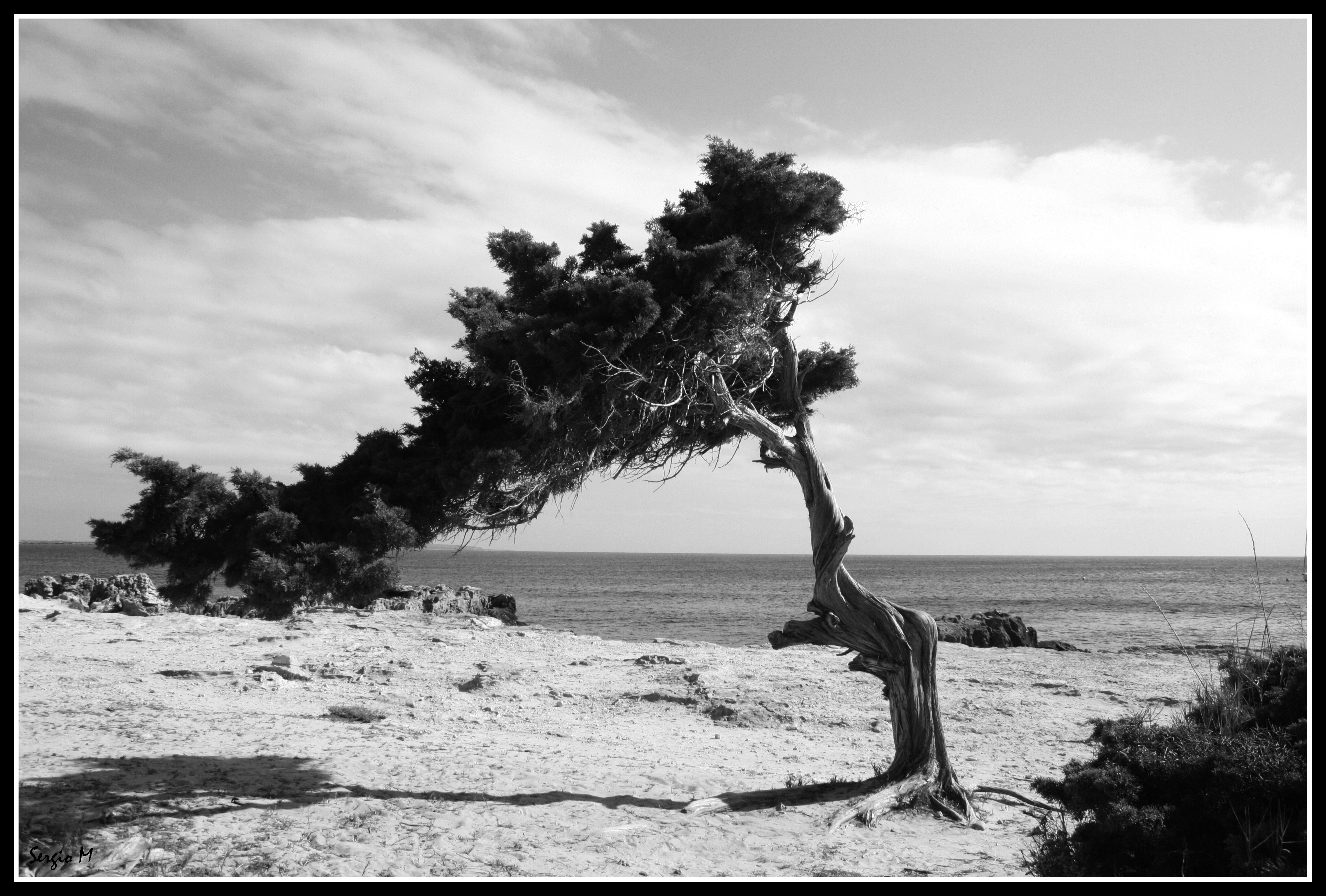 Foto playa Es Cavallet. The Joshua Tree