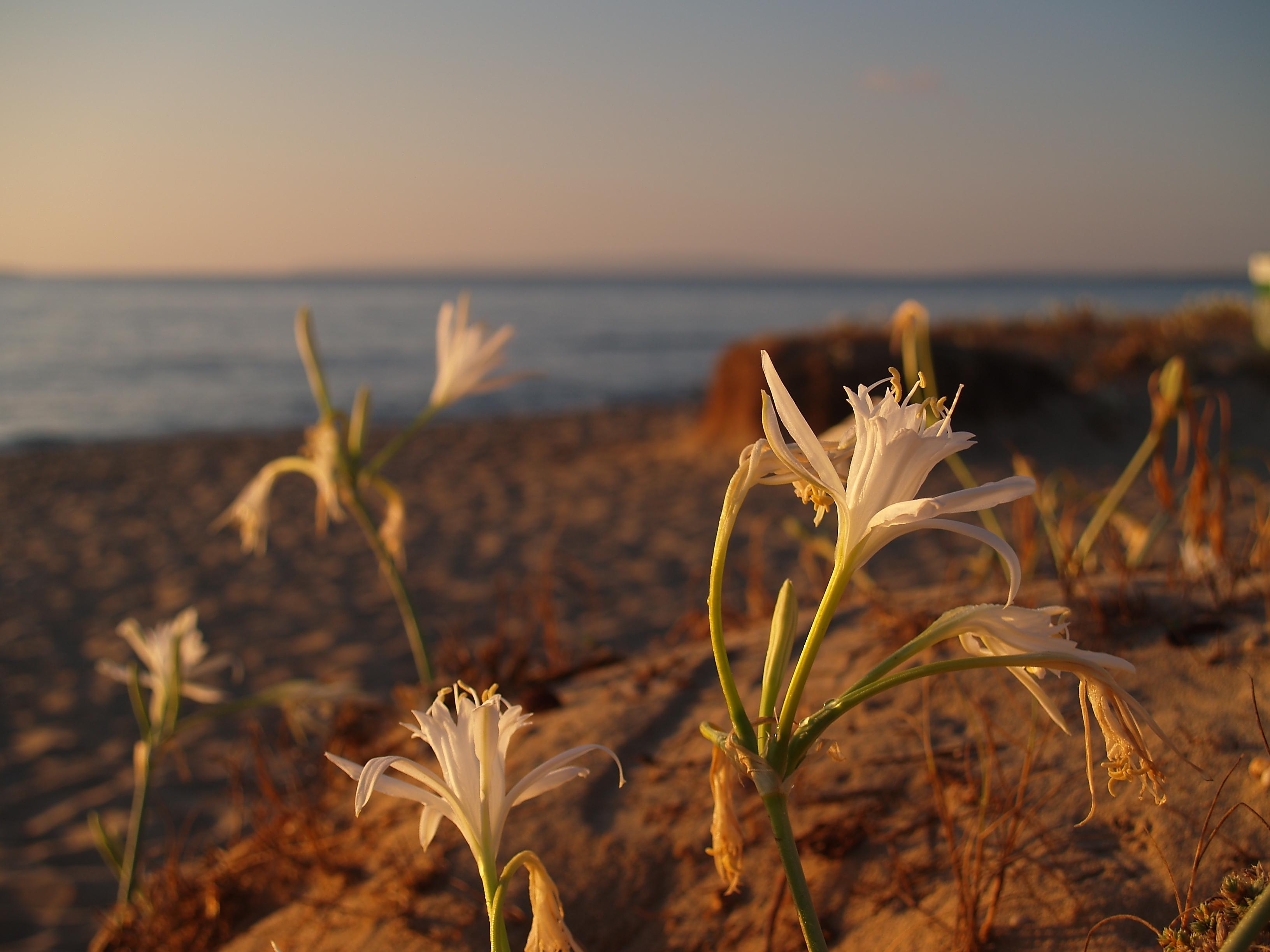 Foto playa Es Cavallet. Es Cavallet