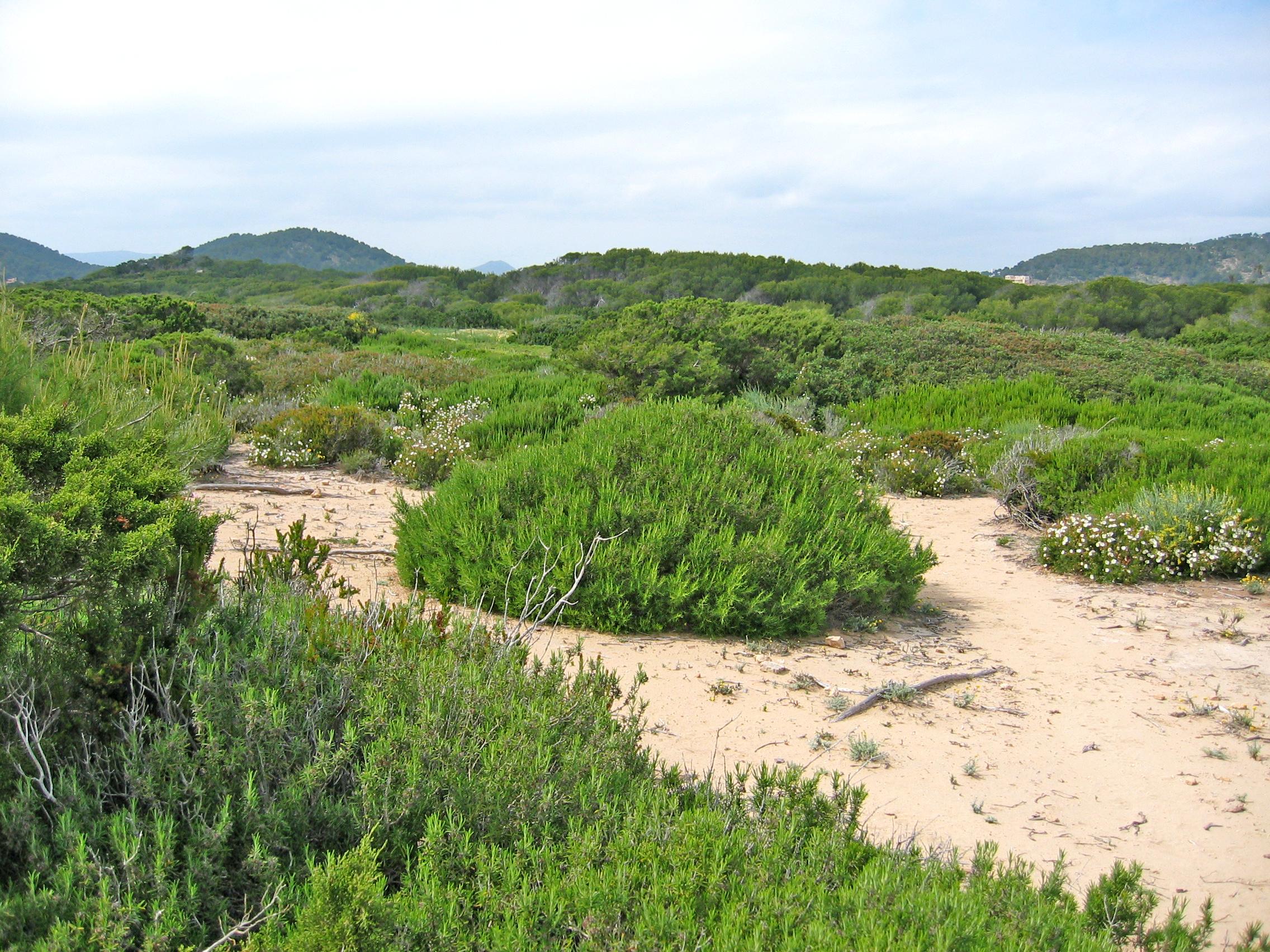 Foto playa Es Cavallet. Punta de sa Torre de ses Portes