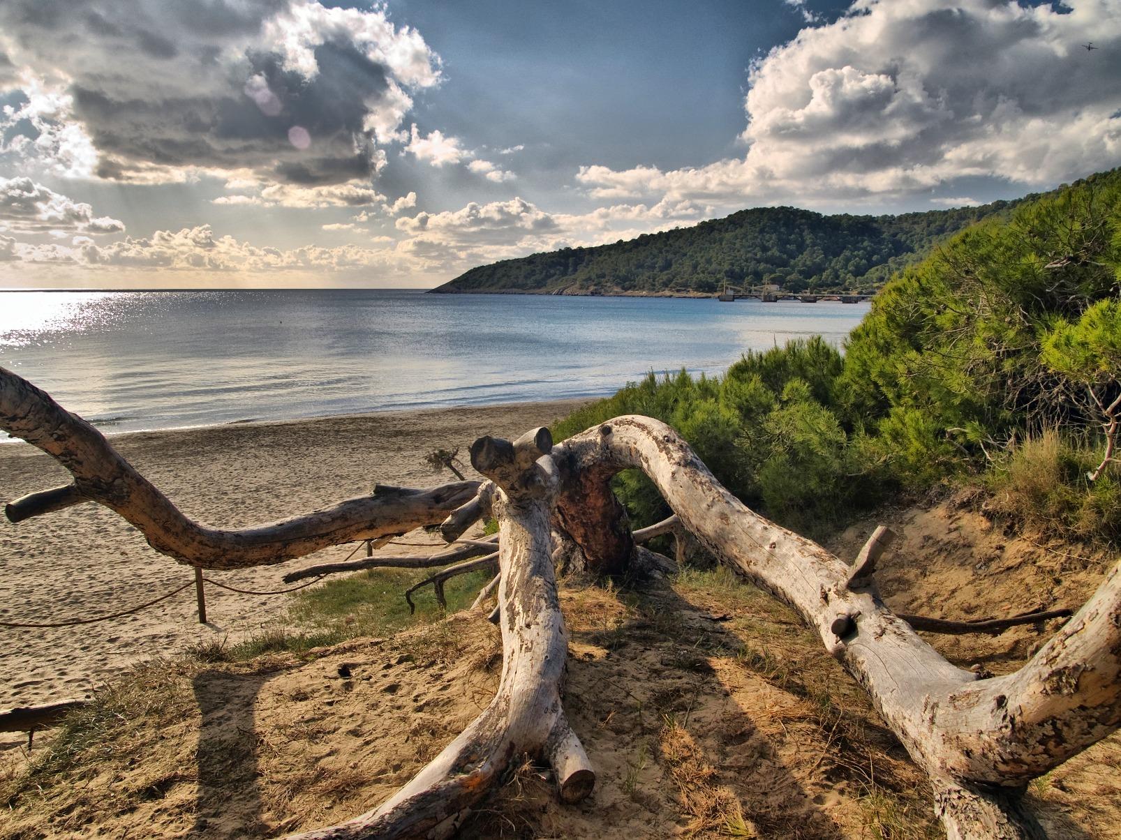 Foto playa Ses Salines / Mitjorn. Pentinats pel vent