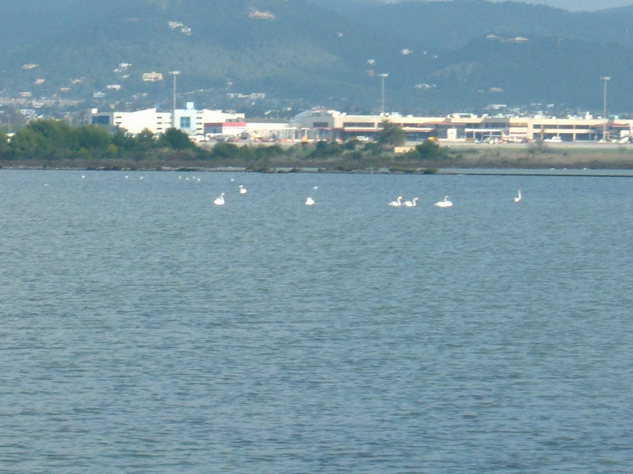 Foto playa Pont de Baix.  AEROPUERTO IBIZA