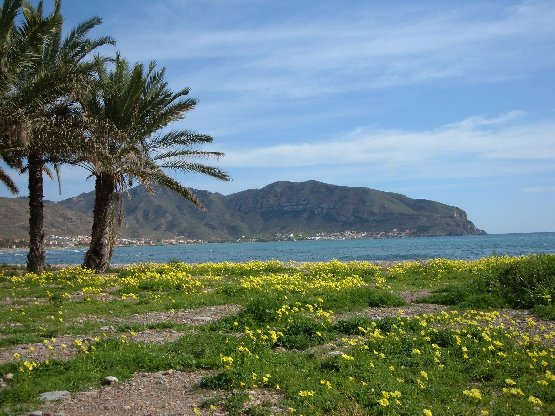 Foto playa Pinet. La Azohia in spring
