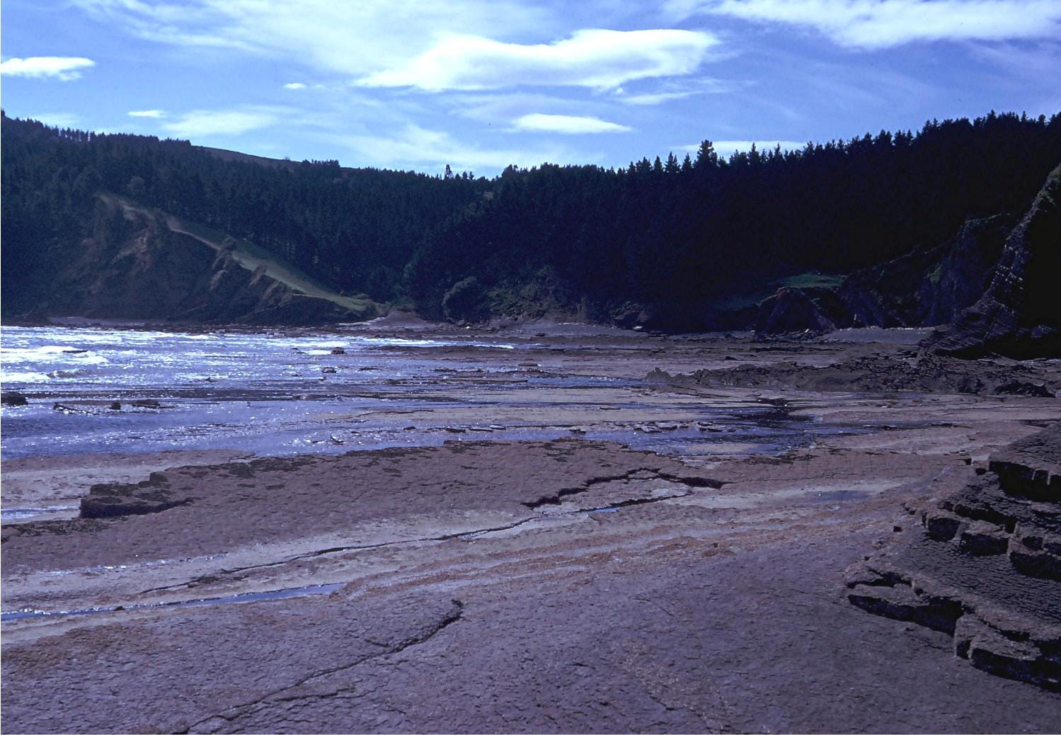 Foto playa Bedarona / Ogeia Bedarona. Ensenada de Oguella