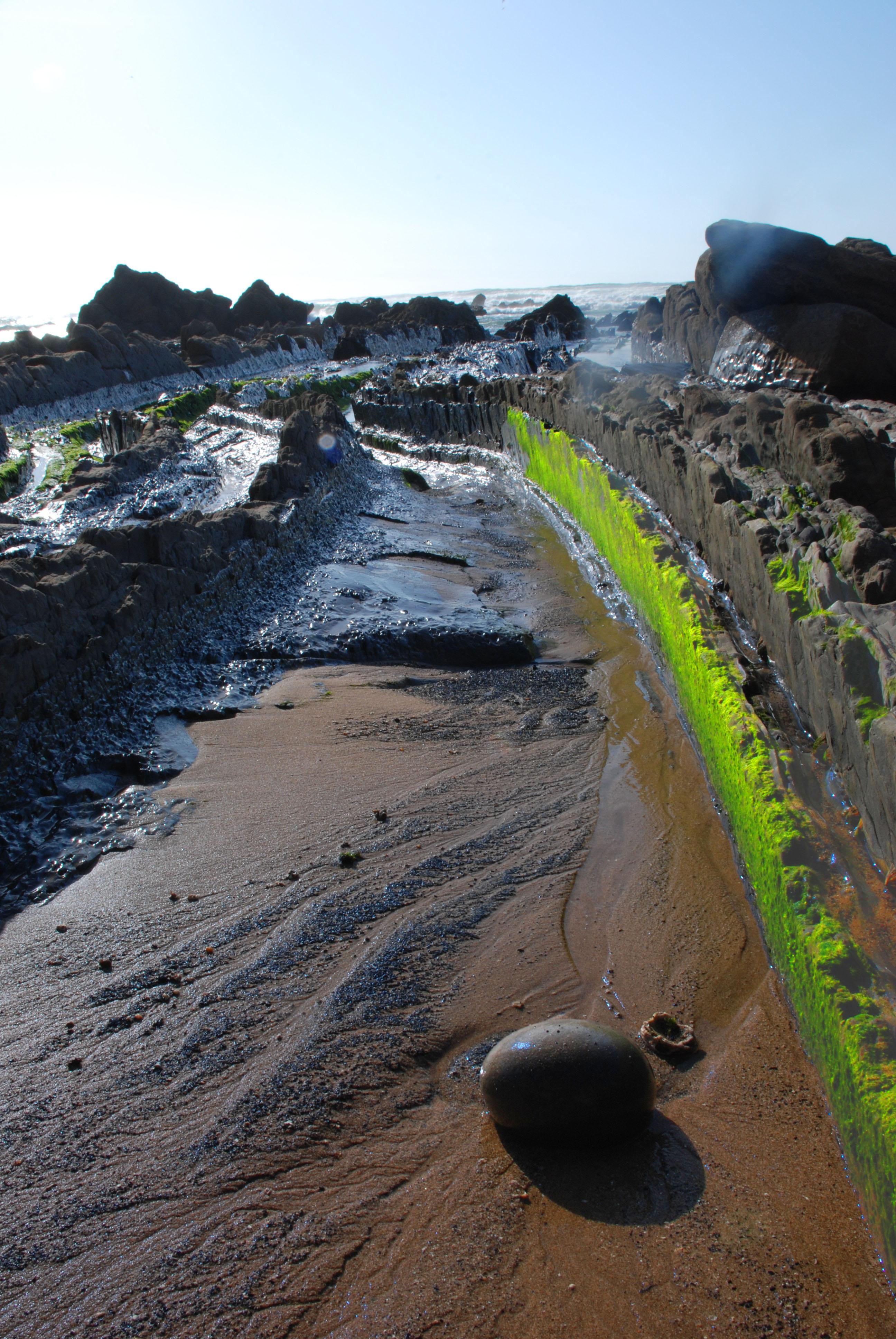 Foto playa Barrika. verde musgo y arena