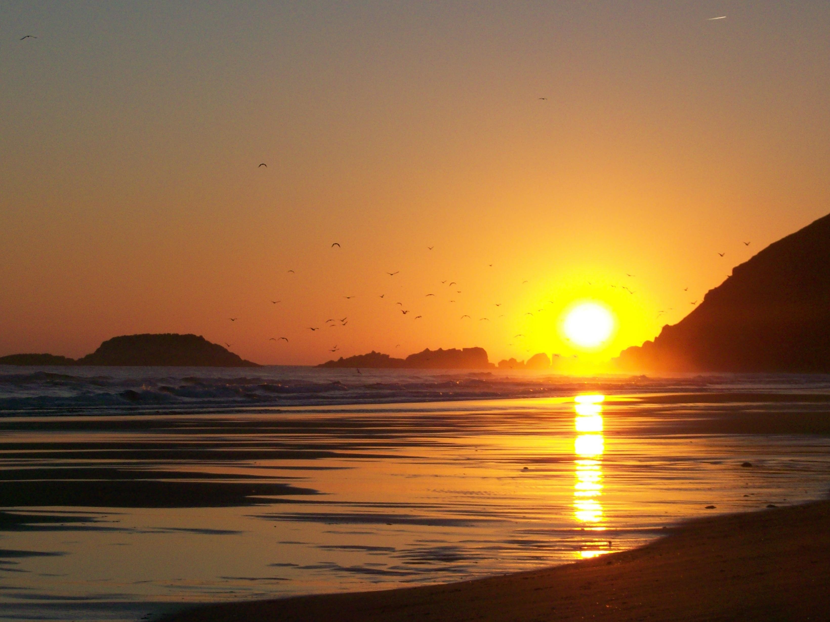 Foto playa Zarautz. Gaviotas mañaneras