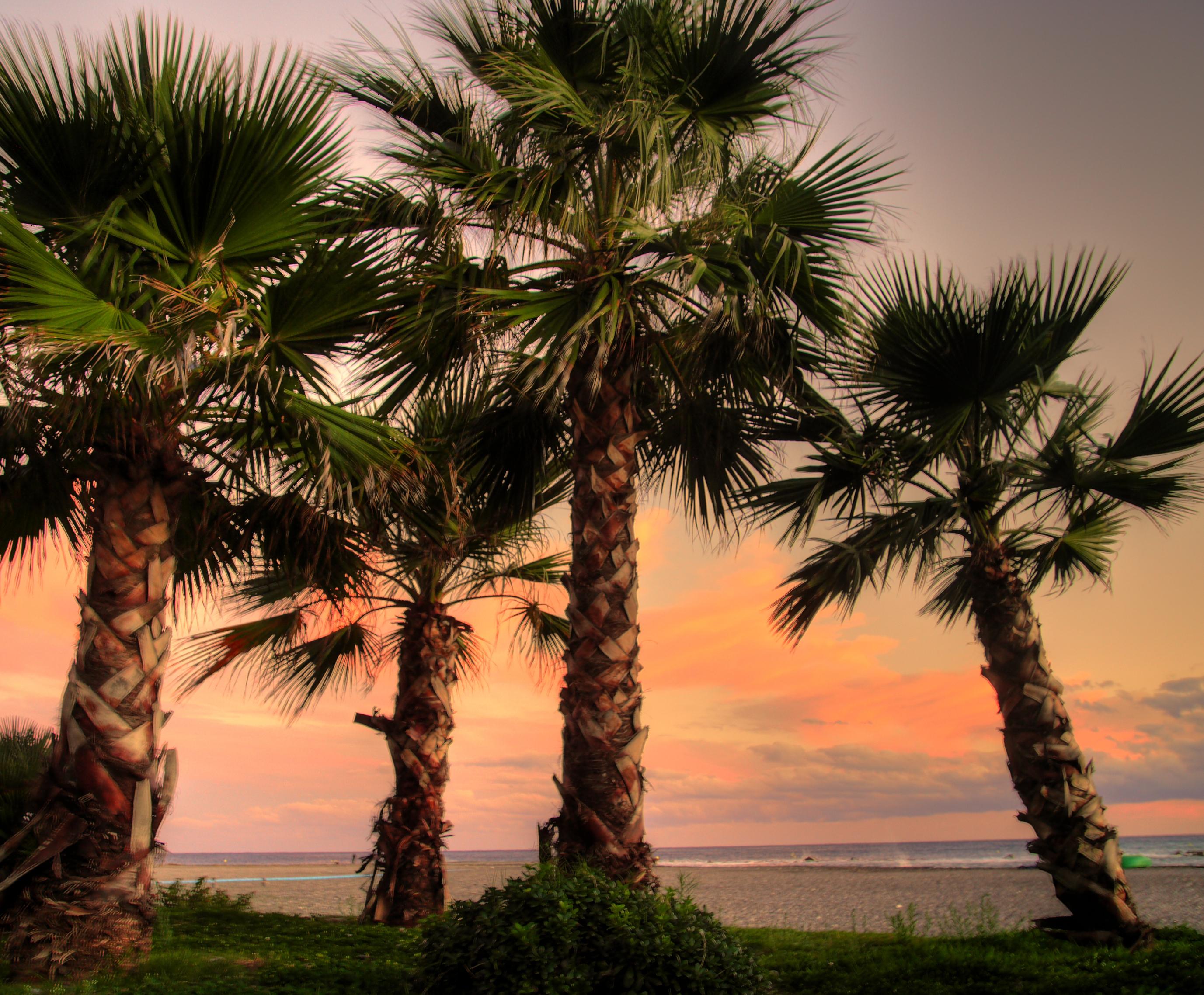Foto playa Caletilla. Atardecer de Otoño