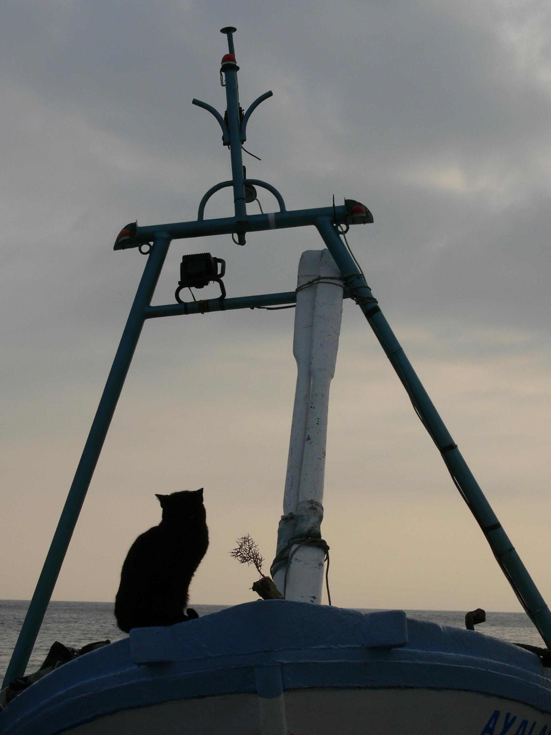 Foto playa Caletilla. Gato marinero