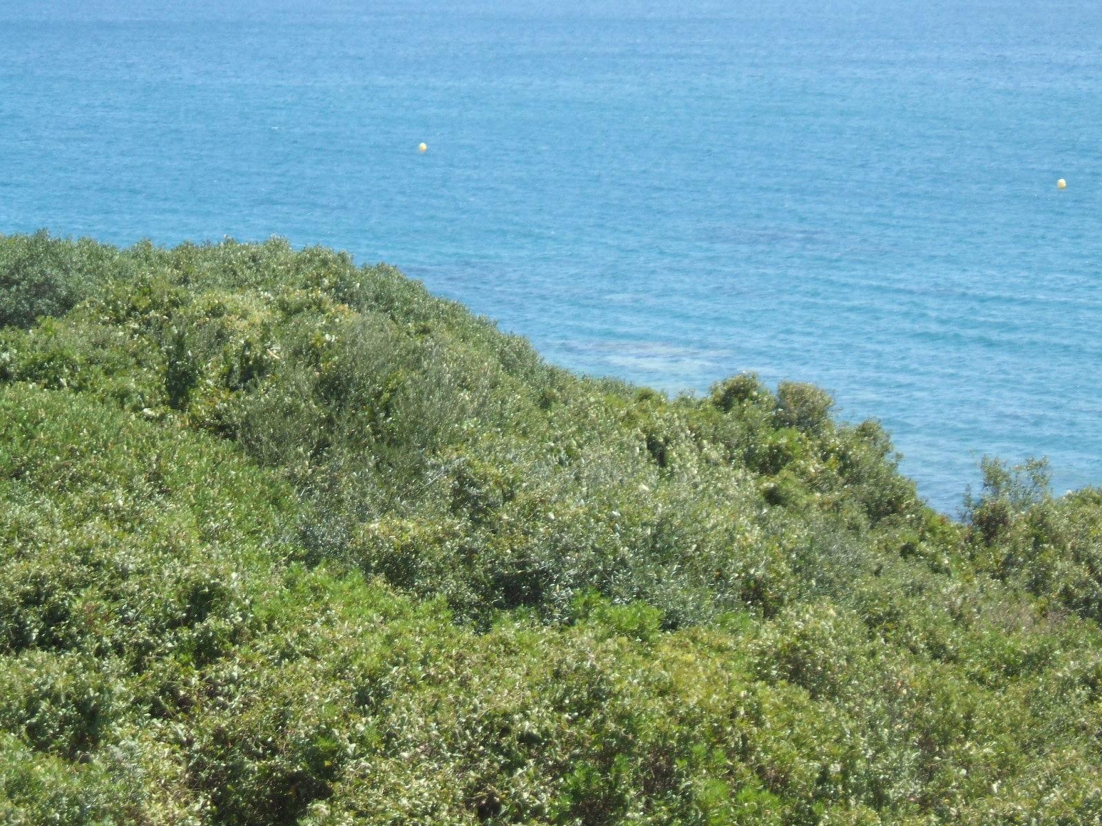 Foto playa Torrecarbonera / El Balneario. Verde y Azul