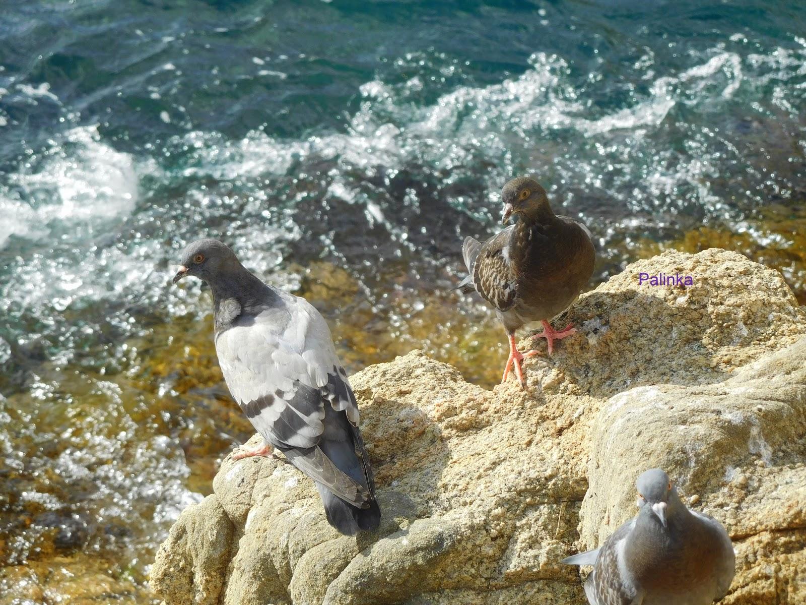 Playa Las Palomas