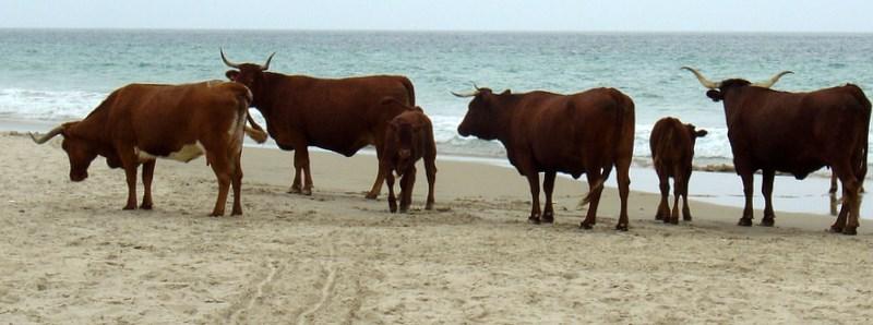 Foto playa Bolonia. Bolóniai Bikák az óceán partján
