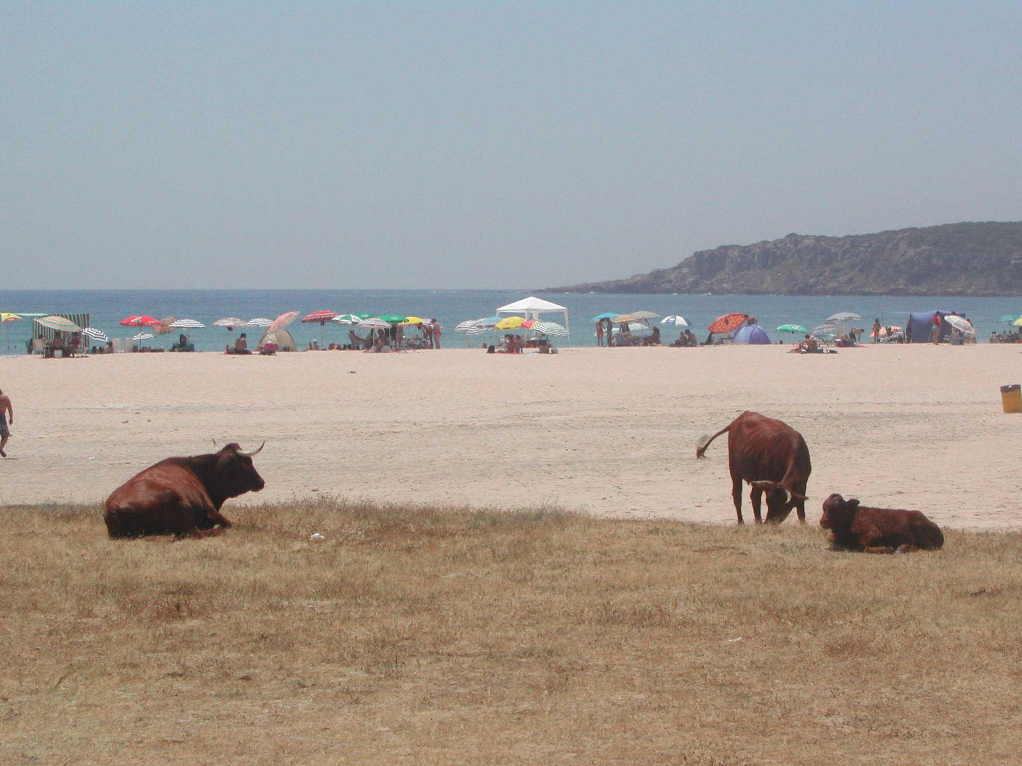 Foto playa Bolonia. Playa de Bolonia