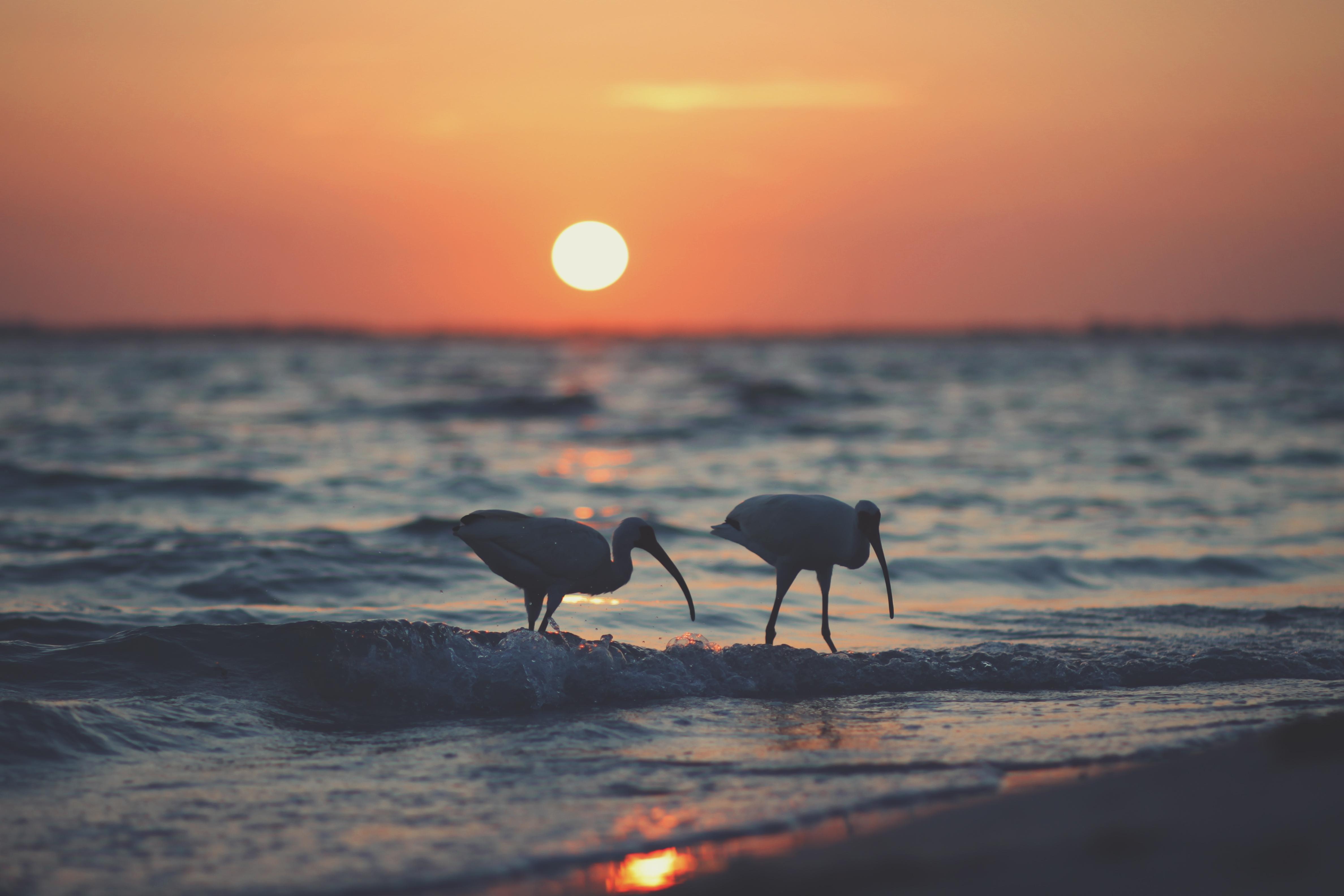 Playa Playa de la Isla