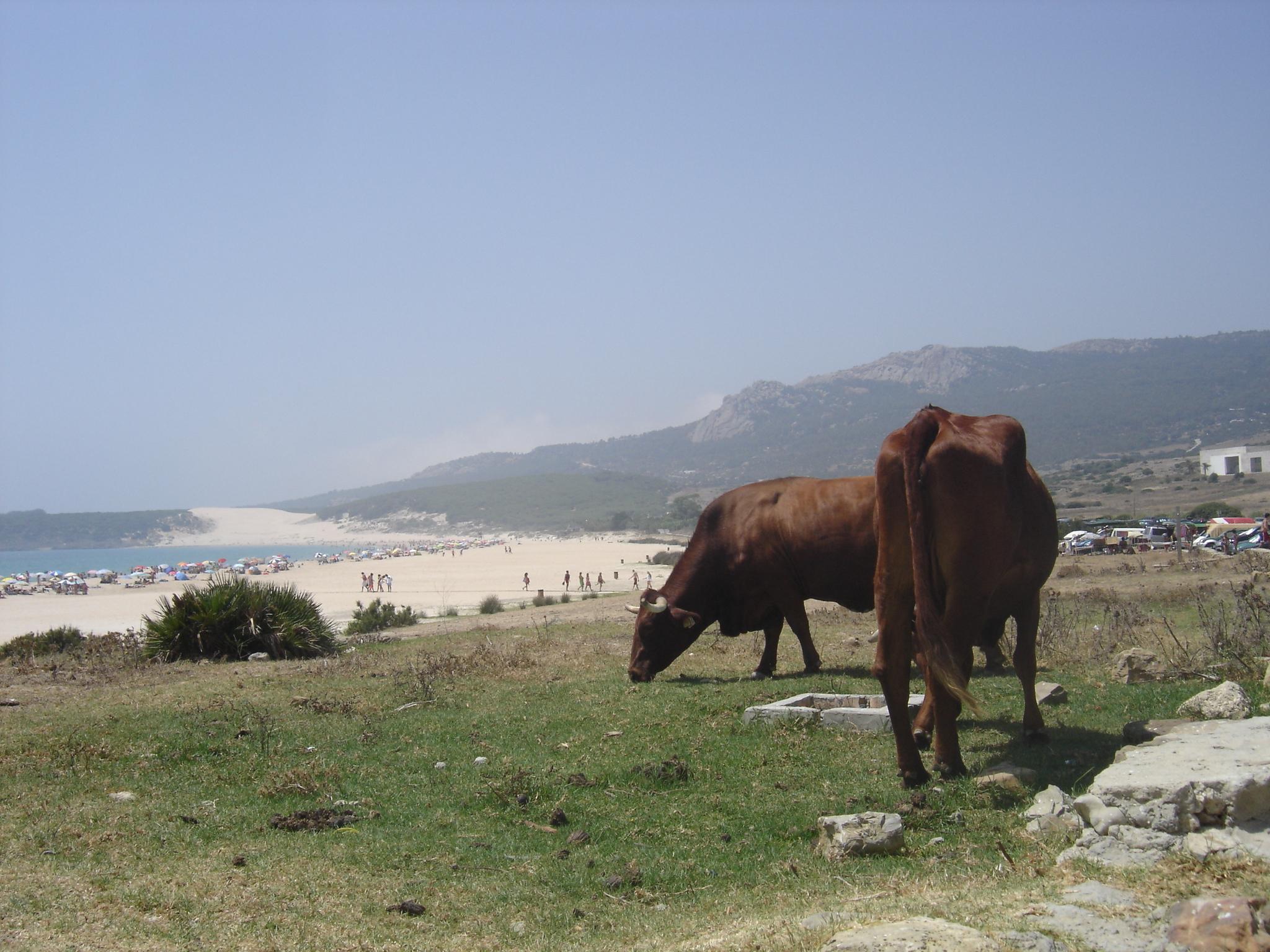 Foto playa Bolonia. En la puerta del chiringuito