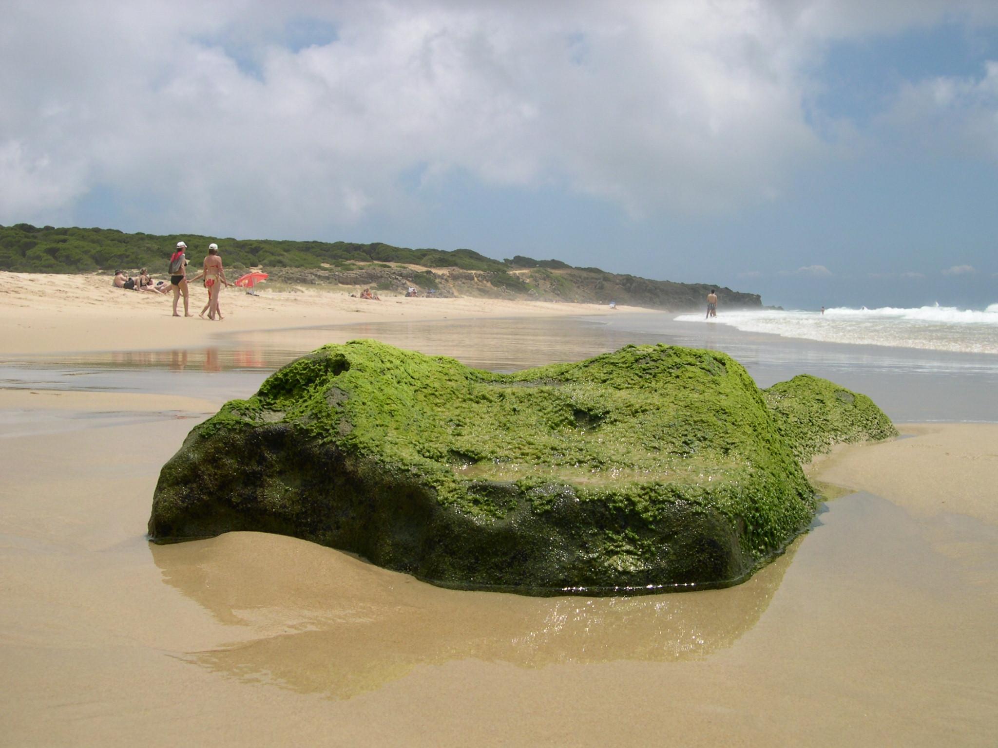 Foto playa El Cañuelo. Zahara-Bolonia6 (CORTEZA).