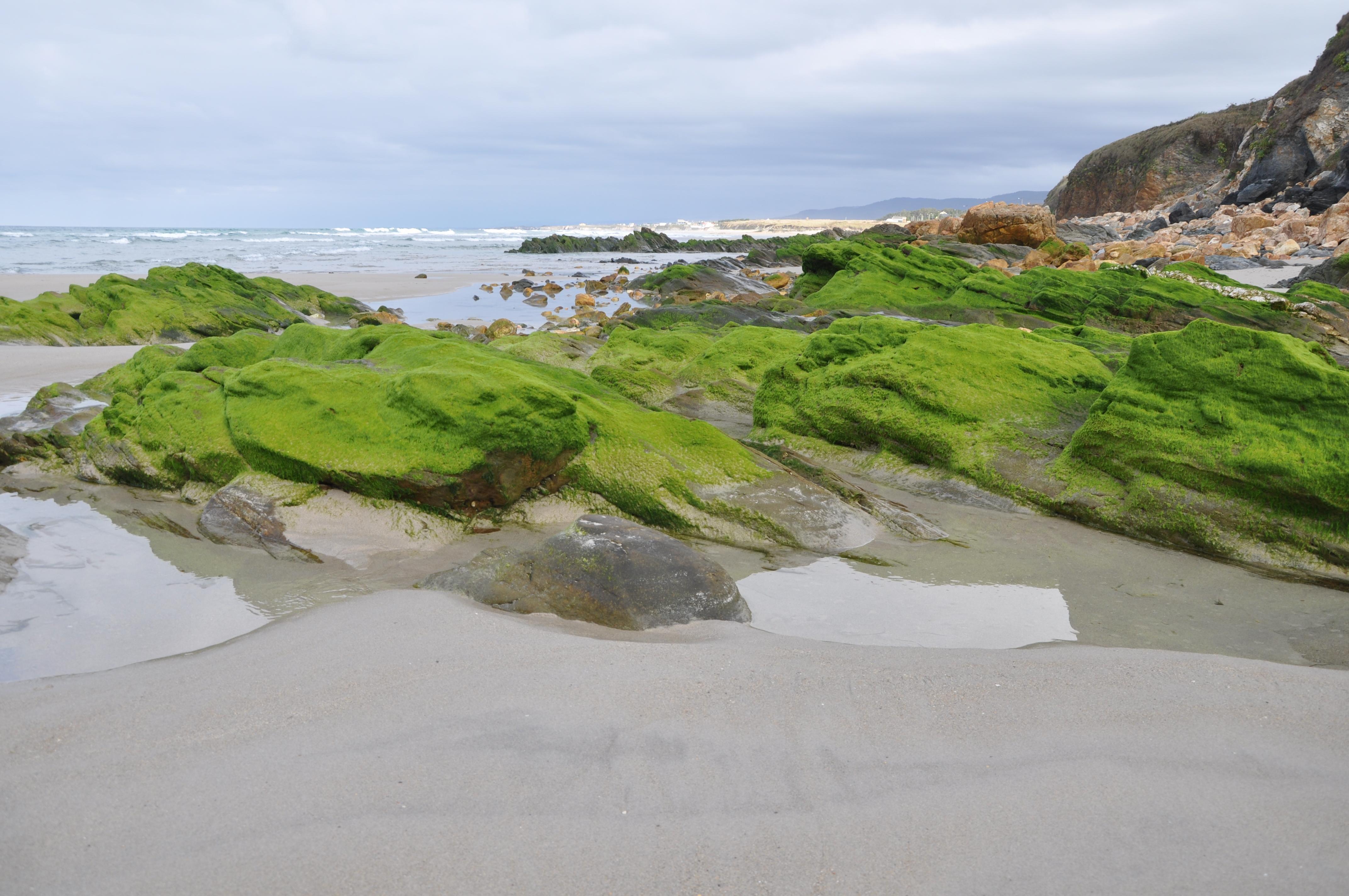Playa Pereira