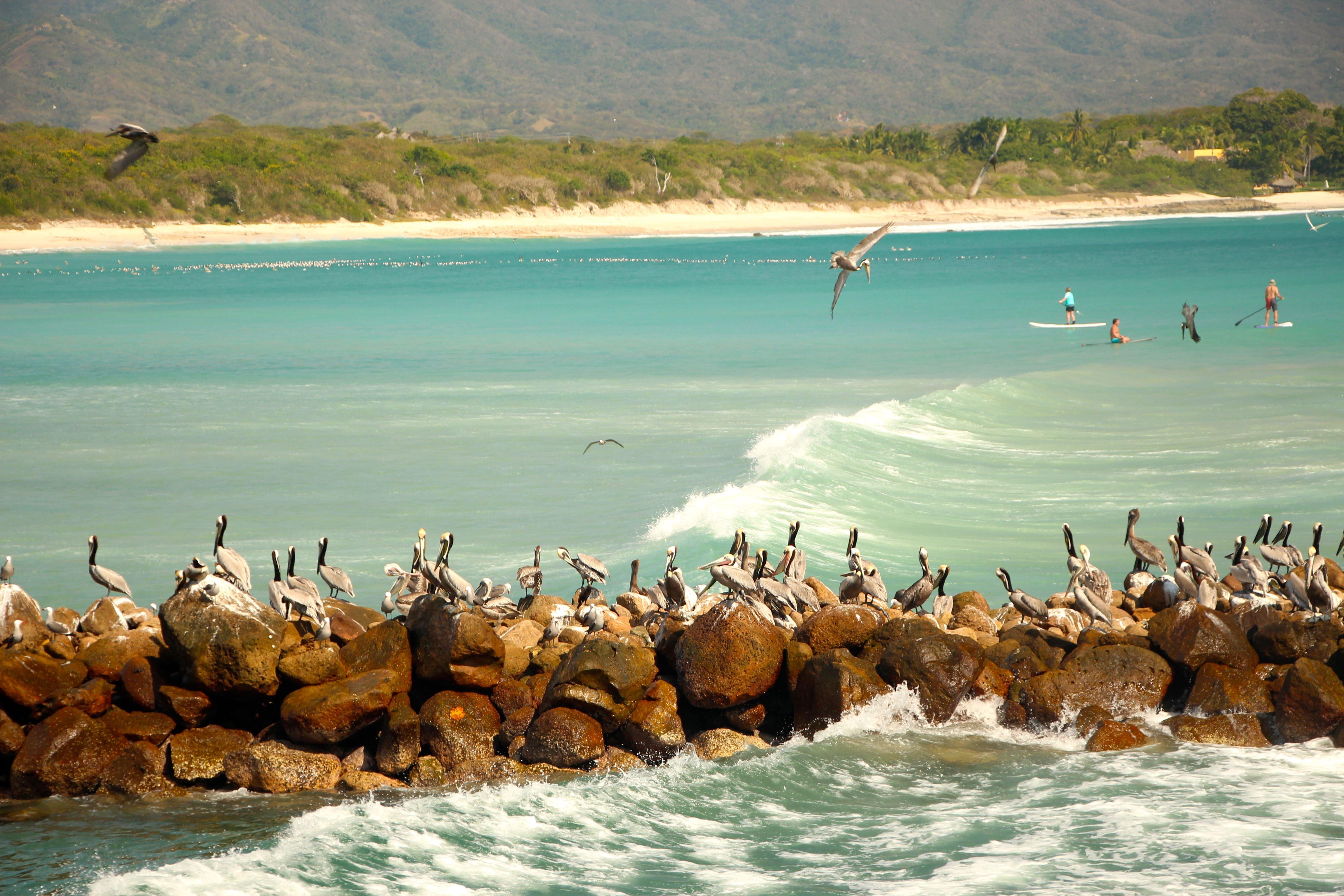 Foto playa Playa de la Punta de la Tordera.