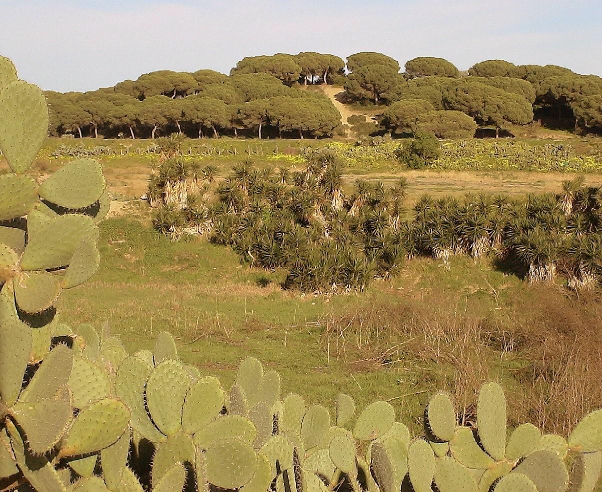 Foto playa Bonanza. Pinar de San Jeronimo