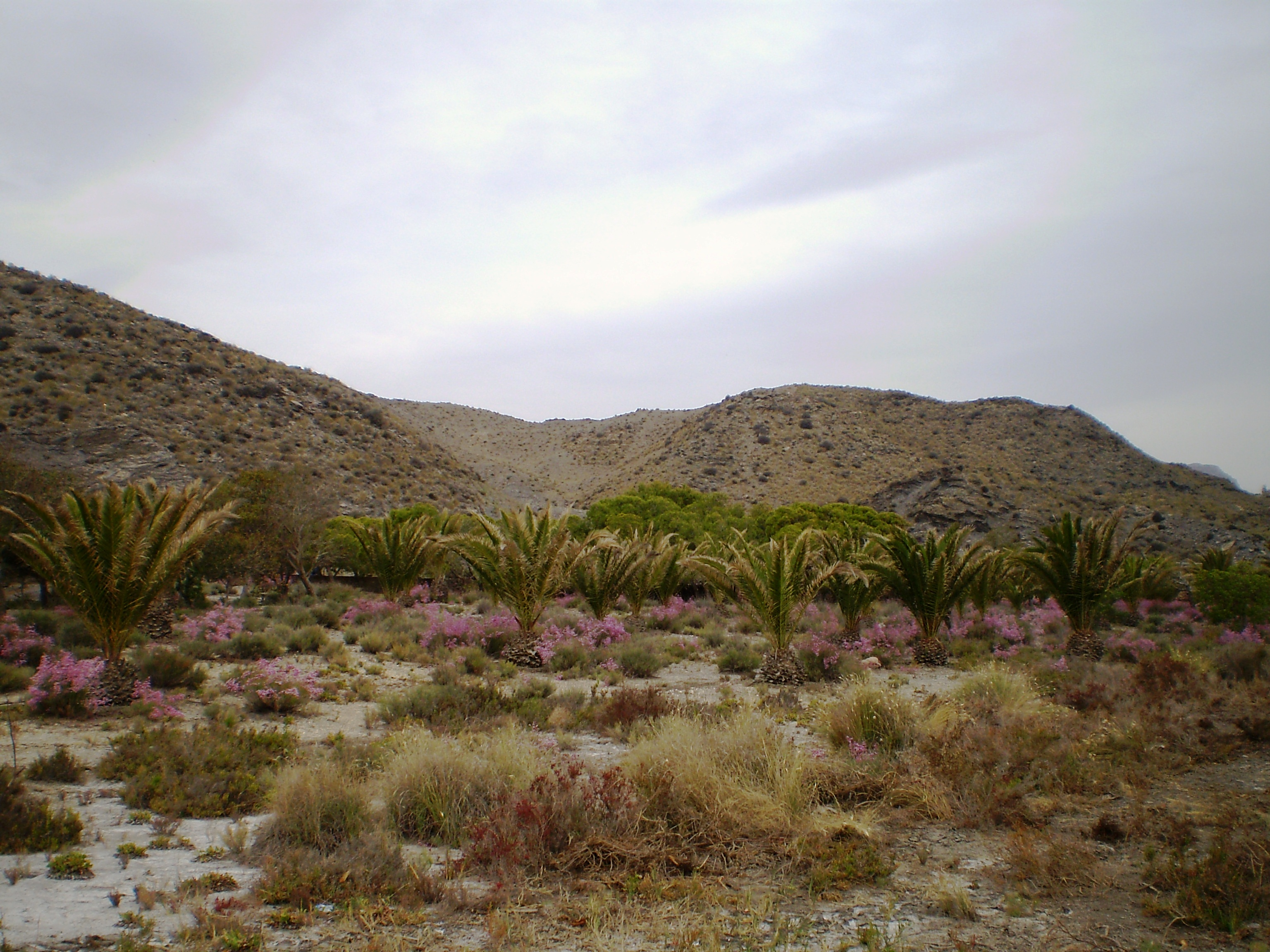 Foto playa Cala Panizo.
