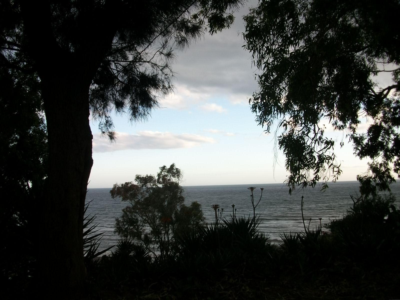 Foto playa Chilches. Árboles y Mar