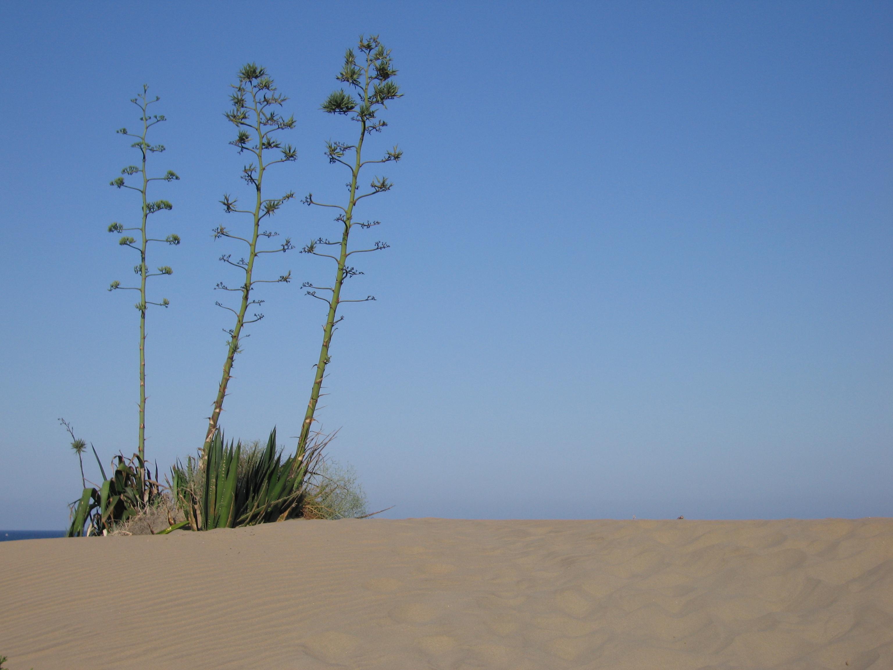 Foto playa Cala Higuera. Pitas en la Playa de los Genoveses