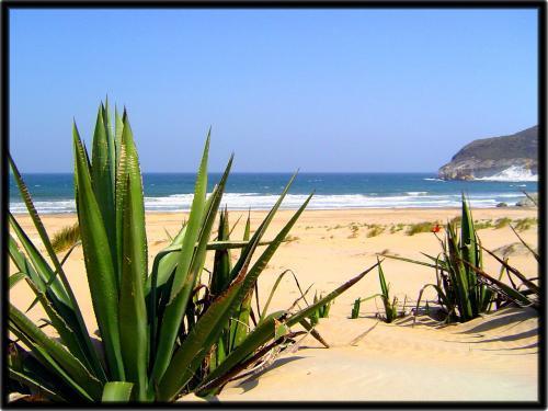 Foto playa Los Genoveses. Playa de los Genoveses