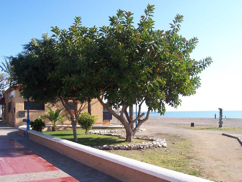 Foto playa Cala del Moral. EL MARIBEL