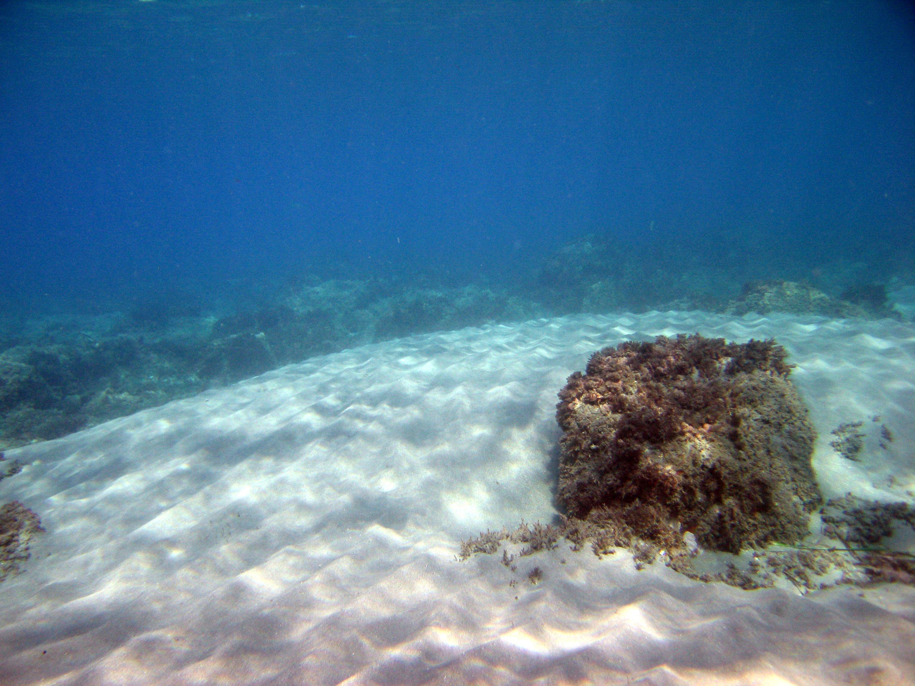 Foto playa La Fabriquilla. Paisaje Submarino en el Corralete