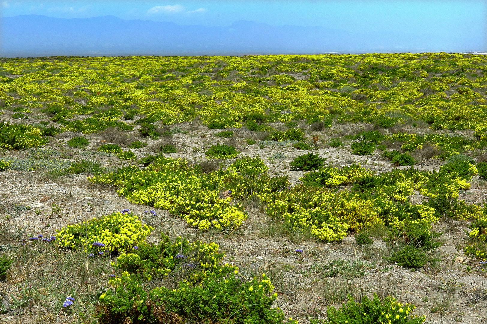 Foto playa Las Salinas de Cabo de Gata. Cabo de Gata, salinas y Flora