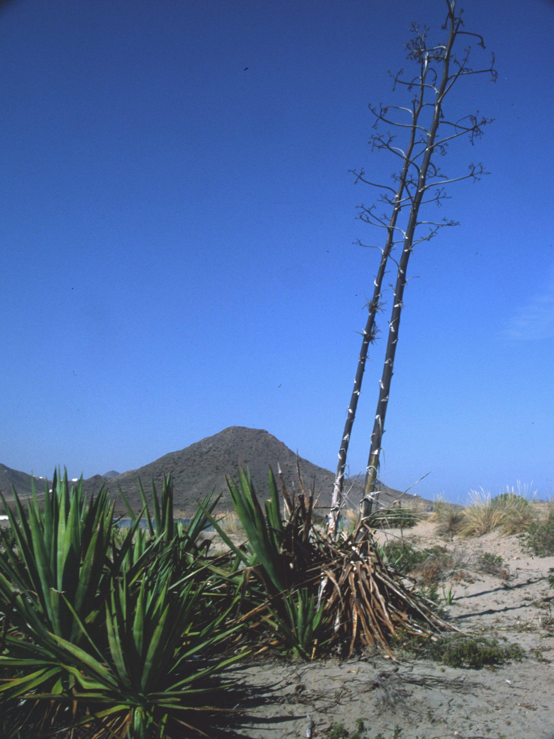 Playa Las Amoladeras