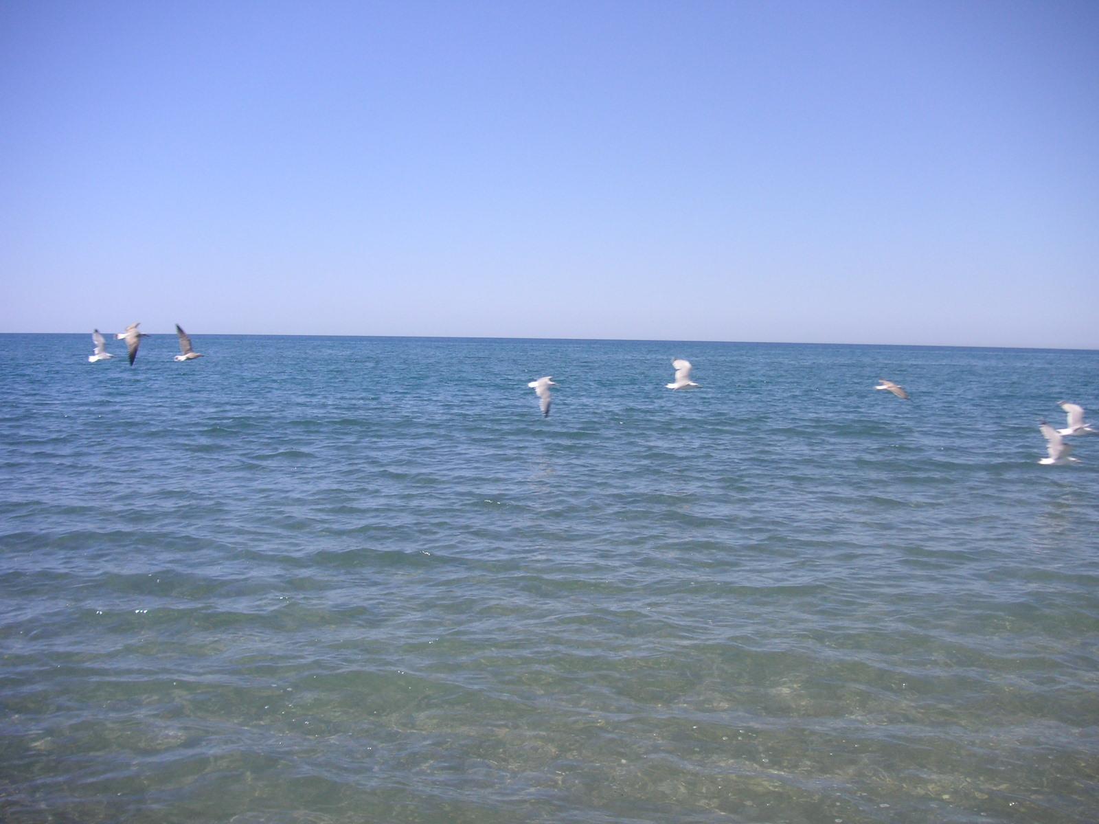 Foto playa Las Amoladeras. Las gaviotas del Cabo de Gata