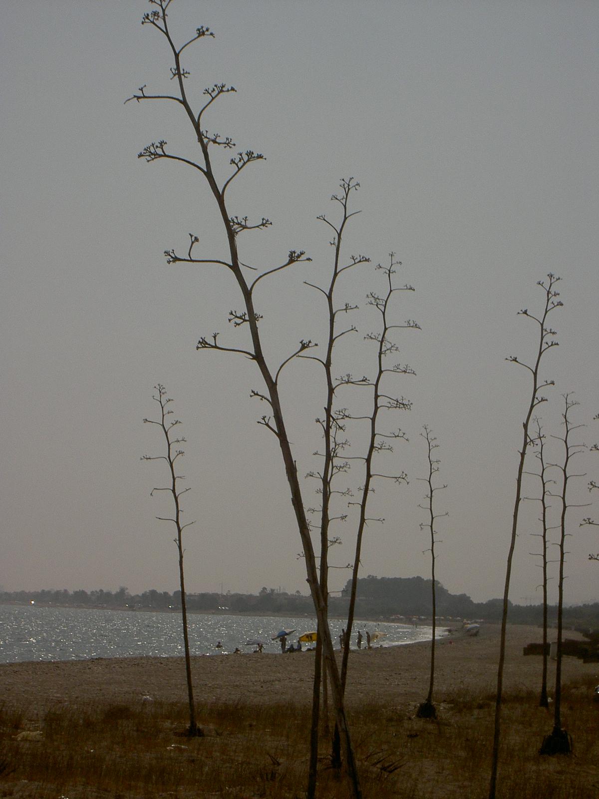 Foto playa El Perdigal / Alquián. PITAS EN COSTACABANA