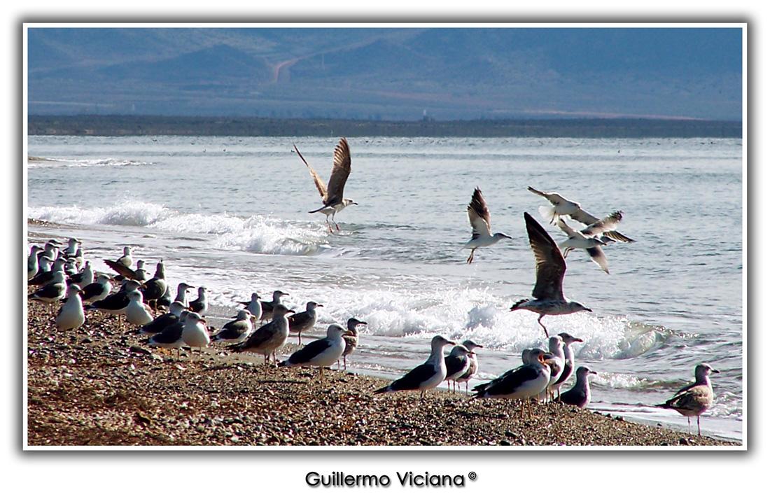 Foto playa El Perdigal / Alquián. Playa de La Cañada - Almería