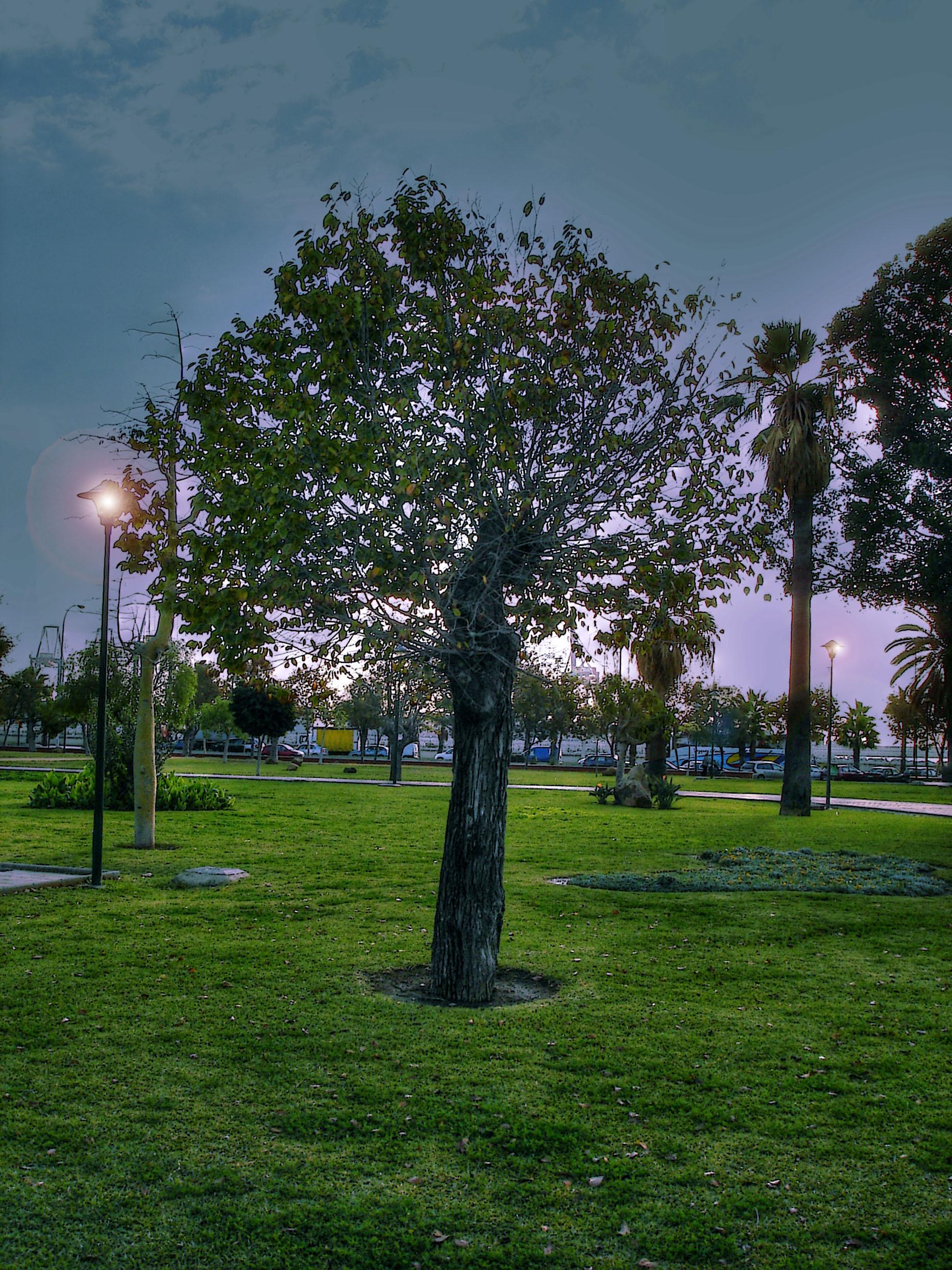 Foto playa Baños del Carmen. El árbol