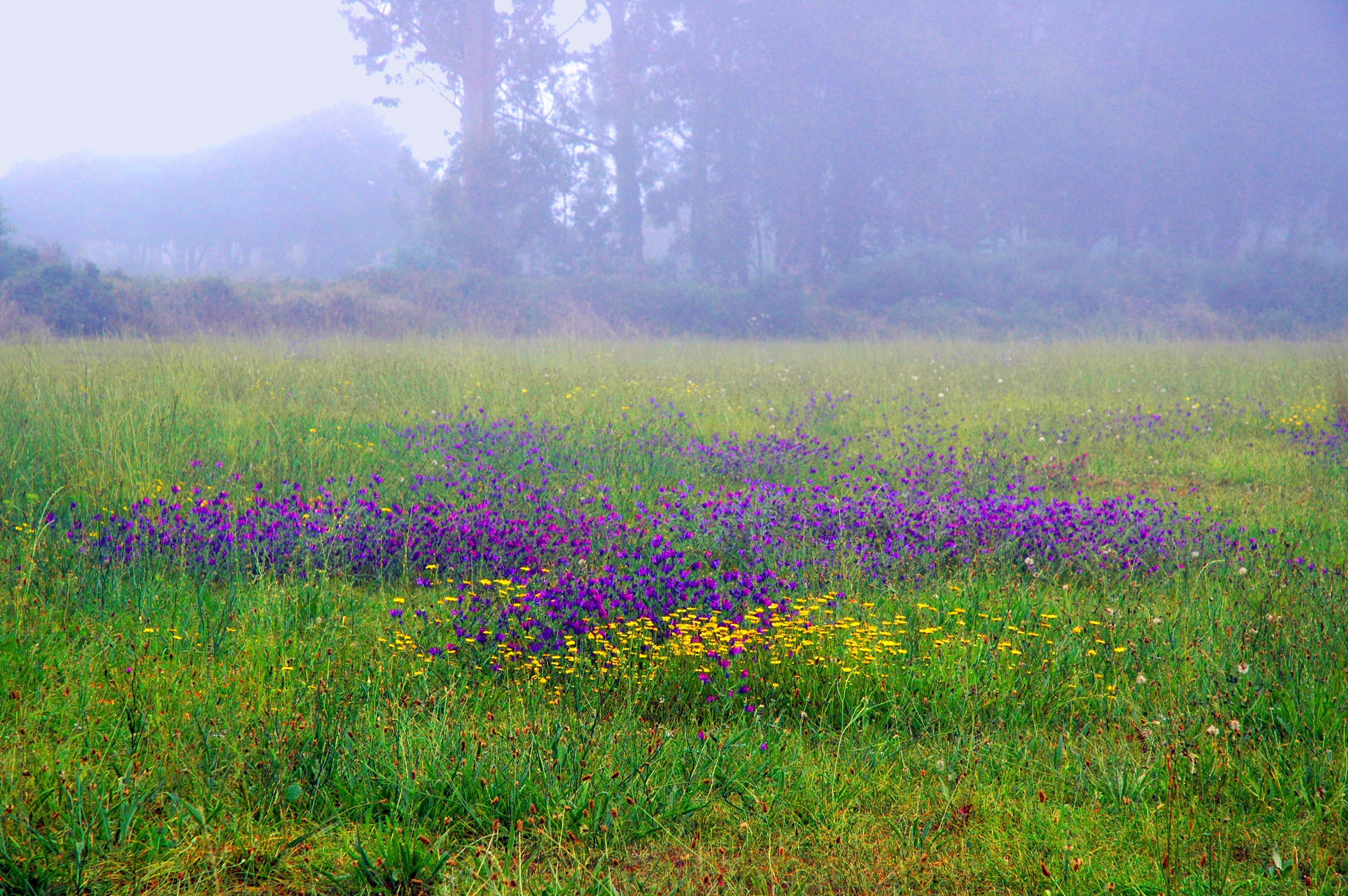 Foto playa Pormenande. Viavélez. Efecto de niebla.