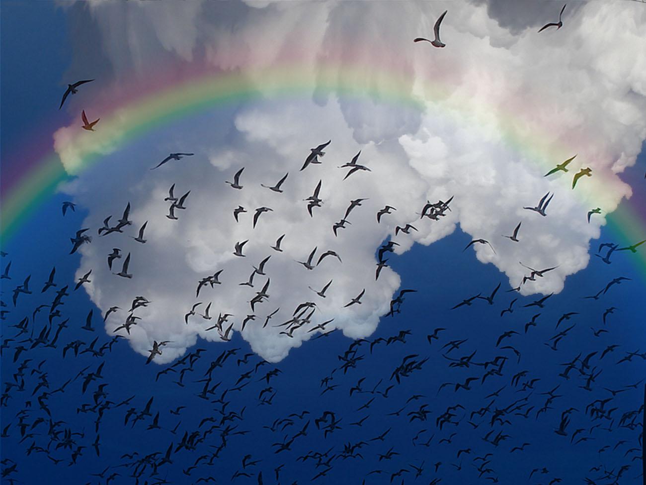 Foto playa Sacaba. Pajaritos en el arco iris