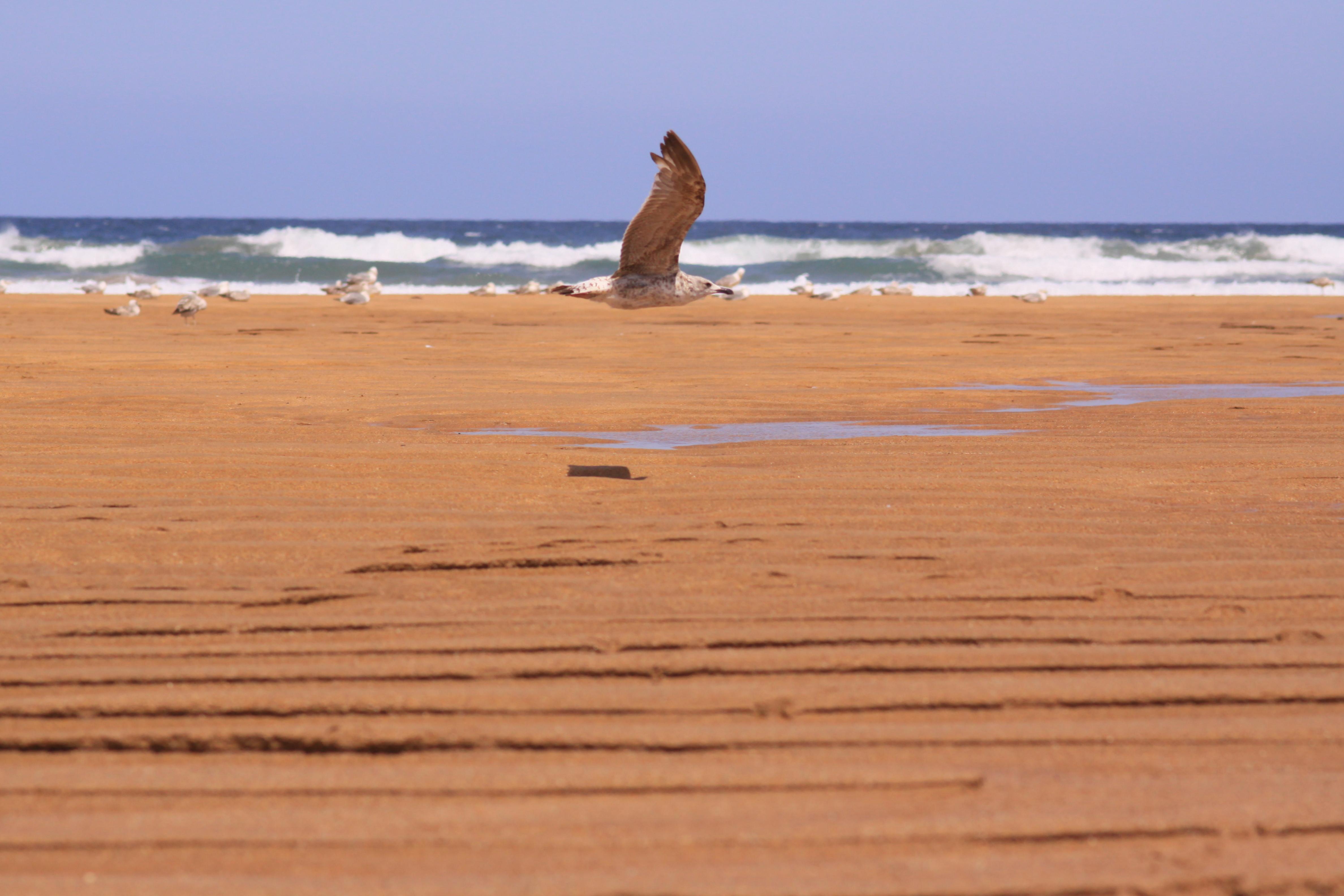 Foto playa La Griega / La Cabaña del Mar. En pleno vuelo