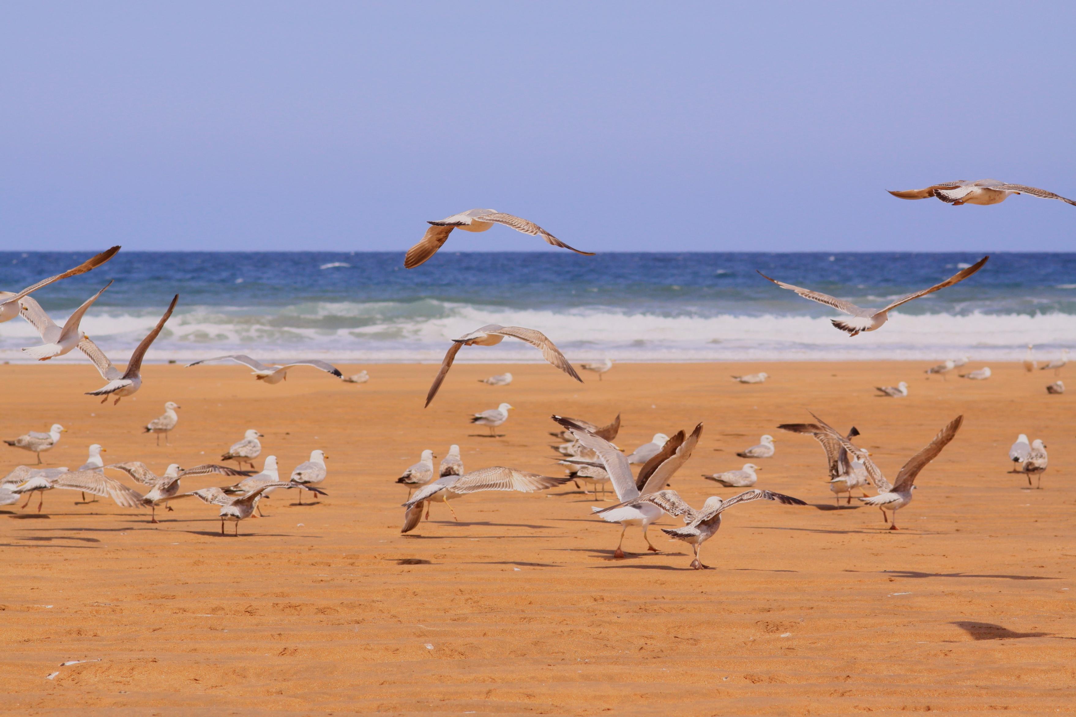 Foto playa La Griega / La Cabaña del Mar. Es hora de irse