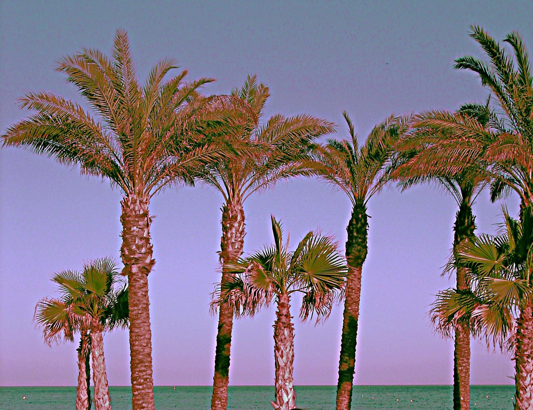 Foto playa La Carihuela. Palmeras de la Carihuela